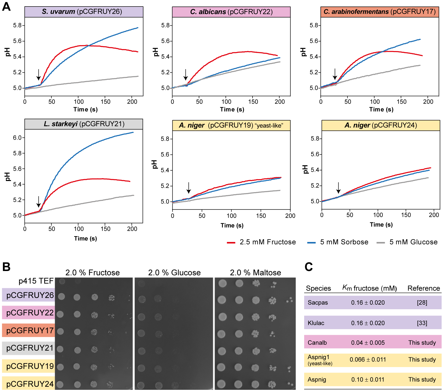 Conservation of Fsy1 function across a broad phylogenetic range.