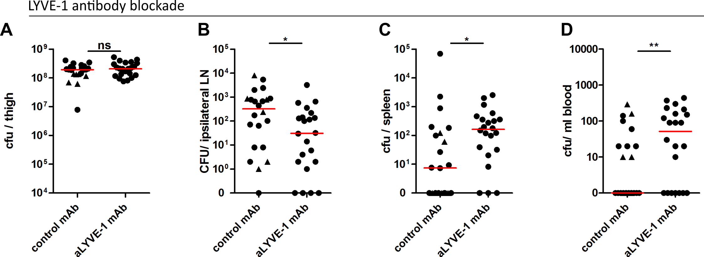 LYVE-1 functional blockade reduces GAS dissemination to draining lymph nodes.