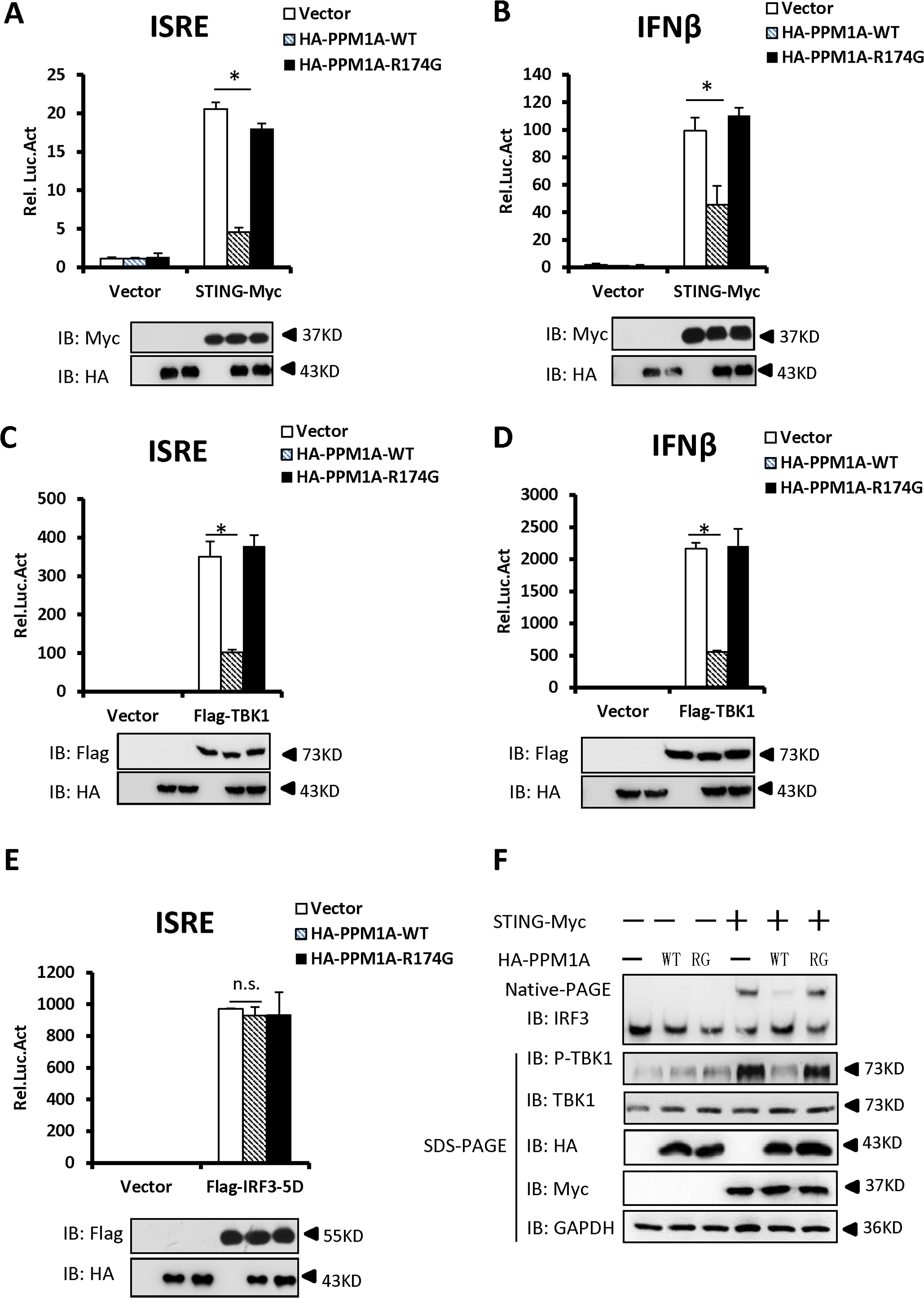 Overexpression of PPM1A inhibits STING-mediated antiviral signaling.