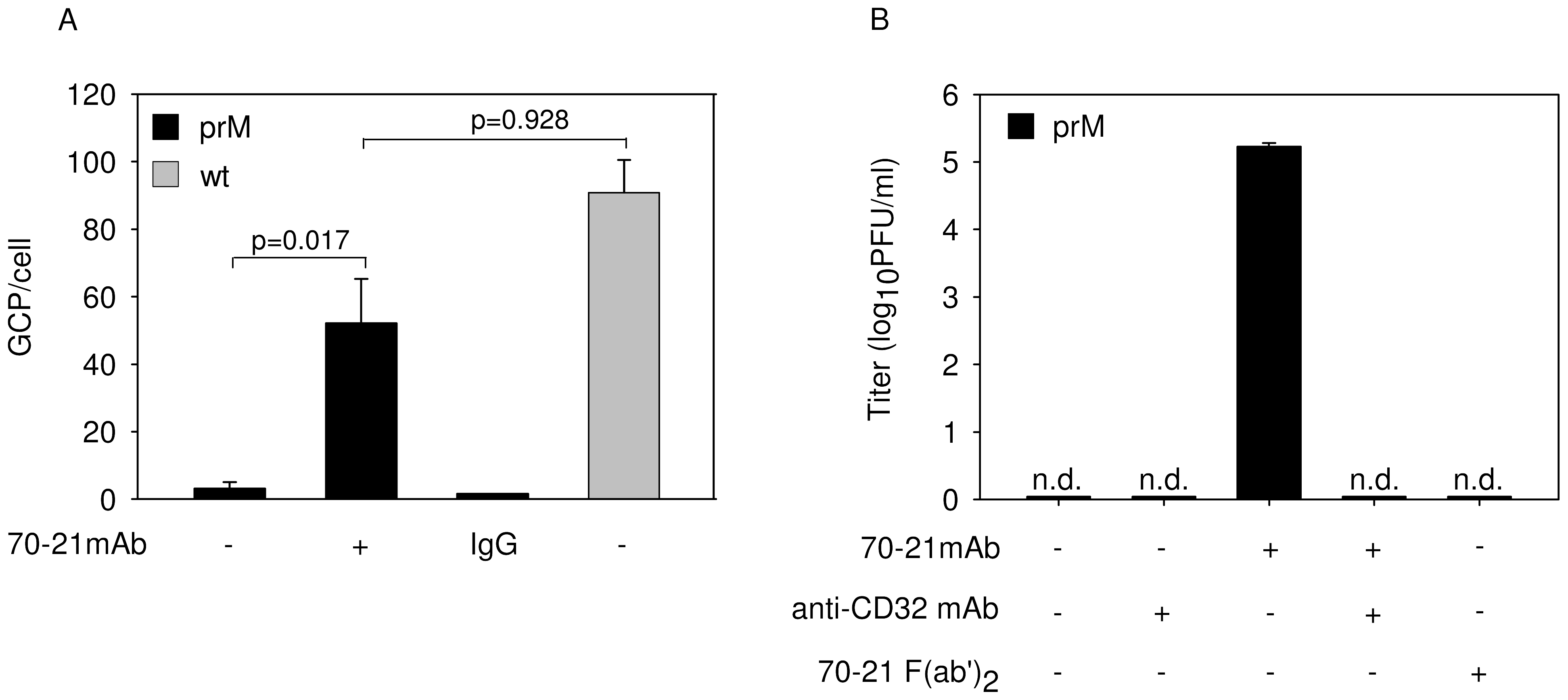 Anti-prM antibody stimulates binding of immature DENV particles to cells through interaction with FcγIIR.