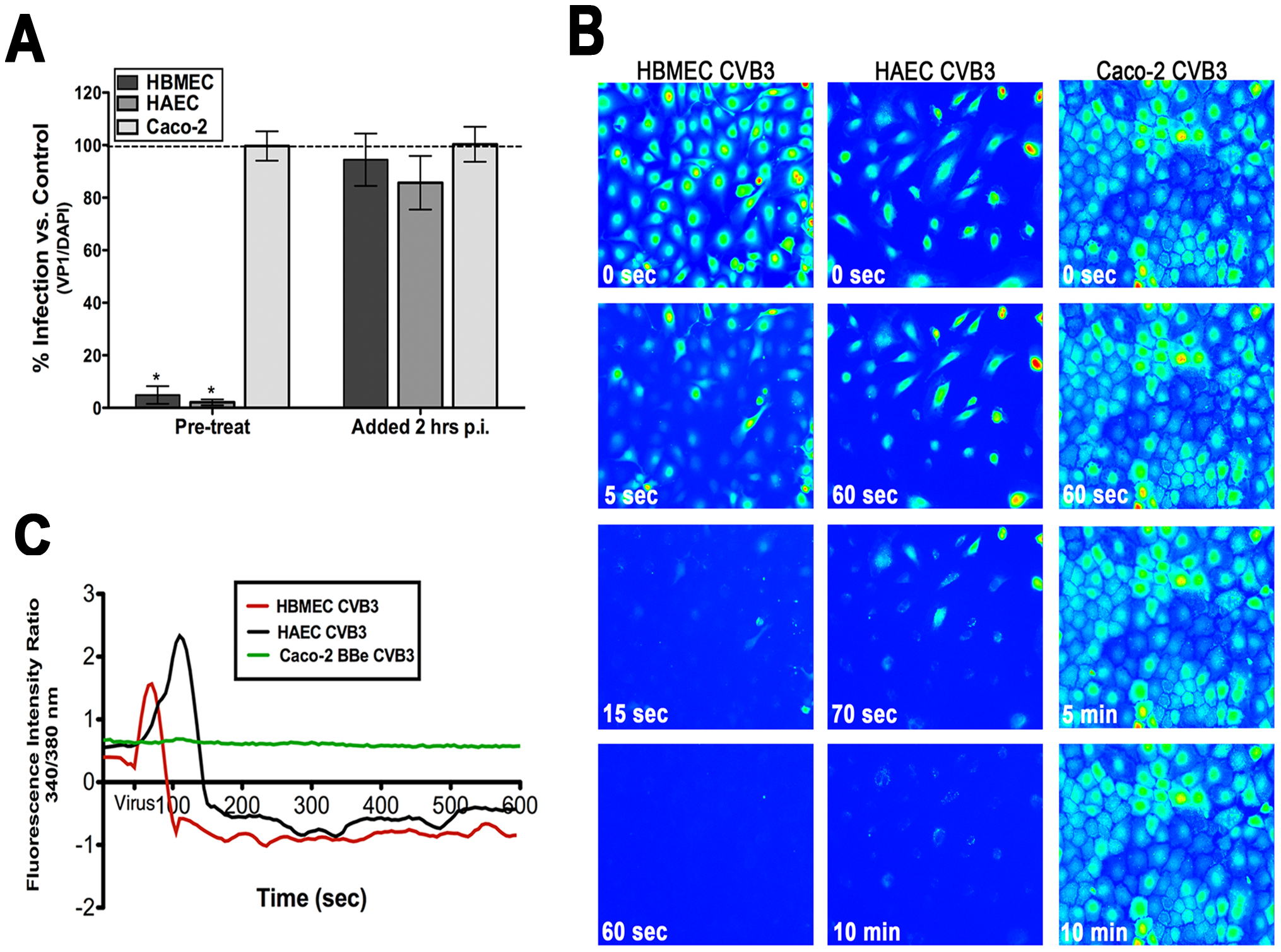 Intracellular Ca<sup>2+</sup> is required and mobilized in endothelia but not epithelia.