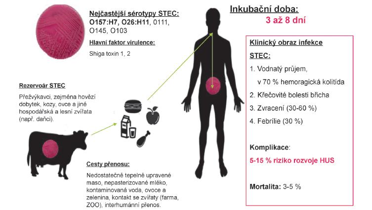 Charakteristika infekce Shiga toxin-produkující <em>E.coli</em> (STEC/VTEC/EHEC).