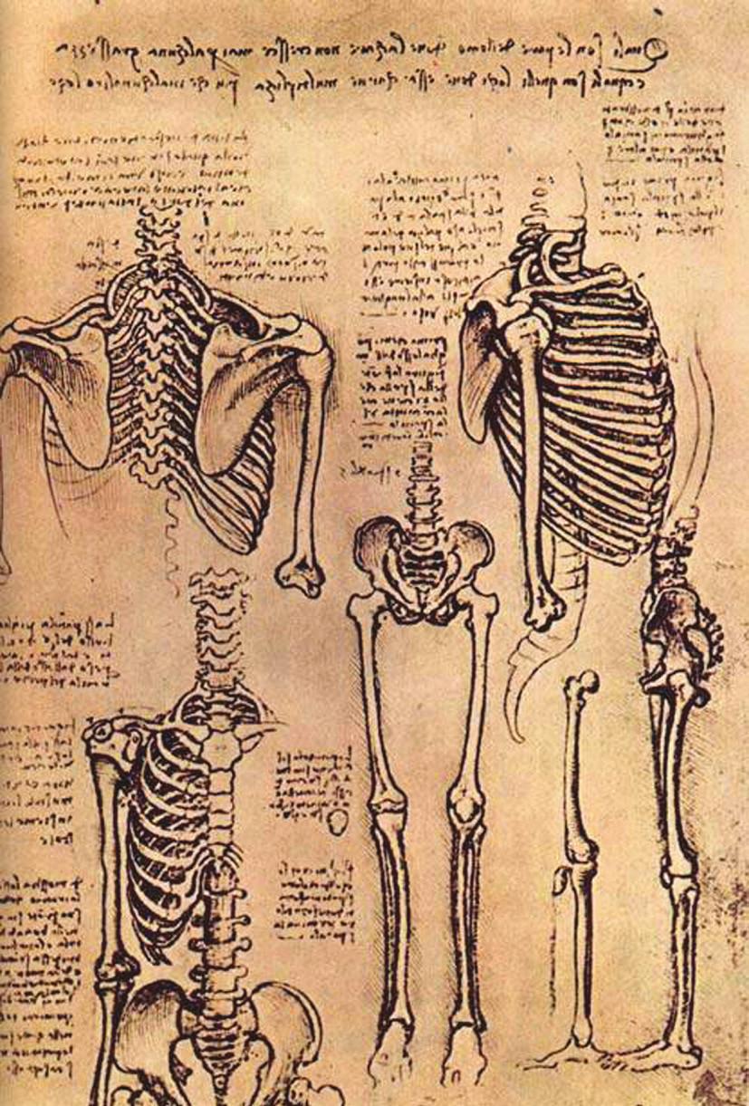 <i>Obr. 3 a 4 Anatomické kresby Leonarda da Vinciho.</i>