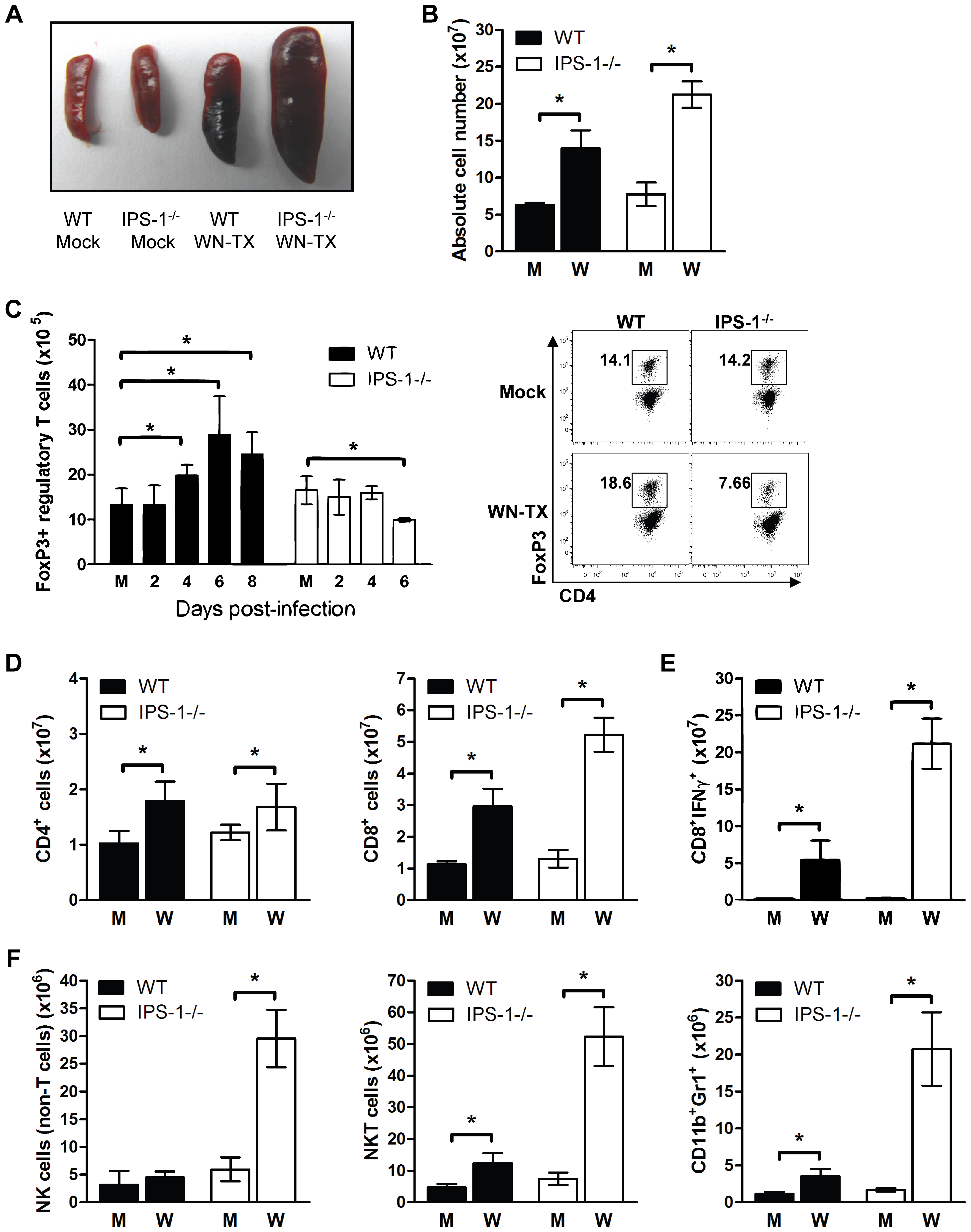 Enhanced inflammation in IPS-1<sup>−/−</sup> infected mice associates with a lack of T<sub>reg</sub> expansion during WNV infection.