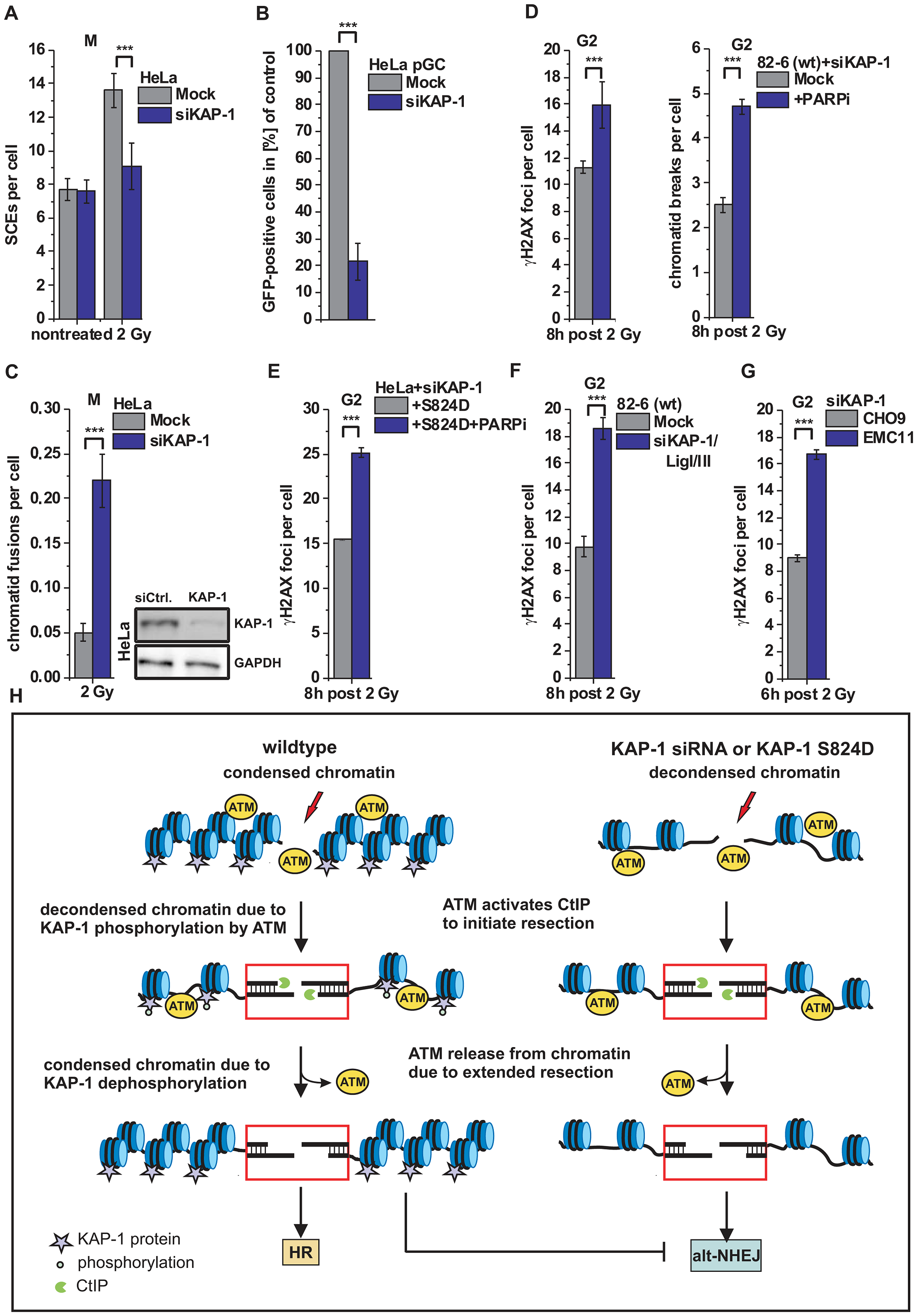 HR requires KAP-1-dependent heterochromatin.