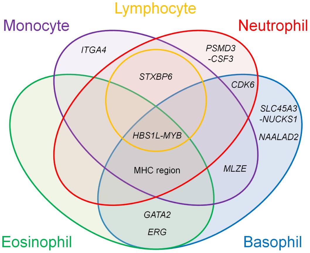 Venn diagram of the pleiotropic associations among the WBC subtypes.