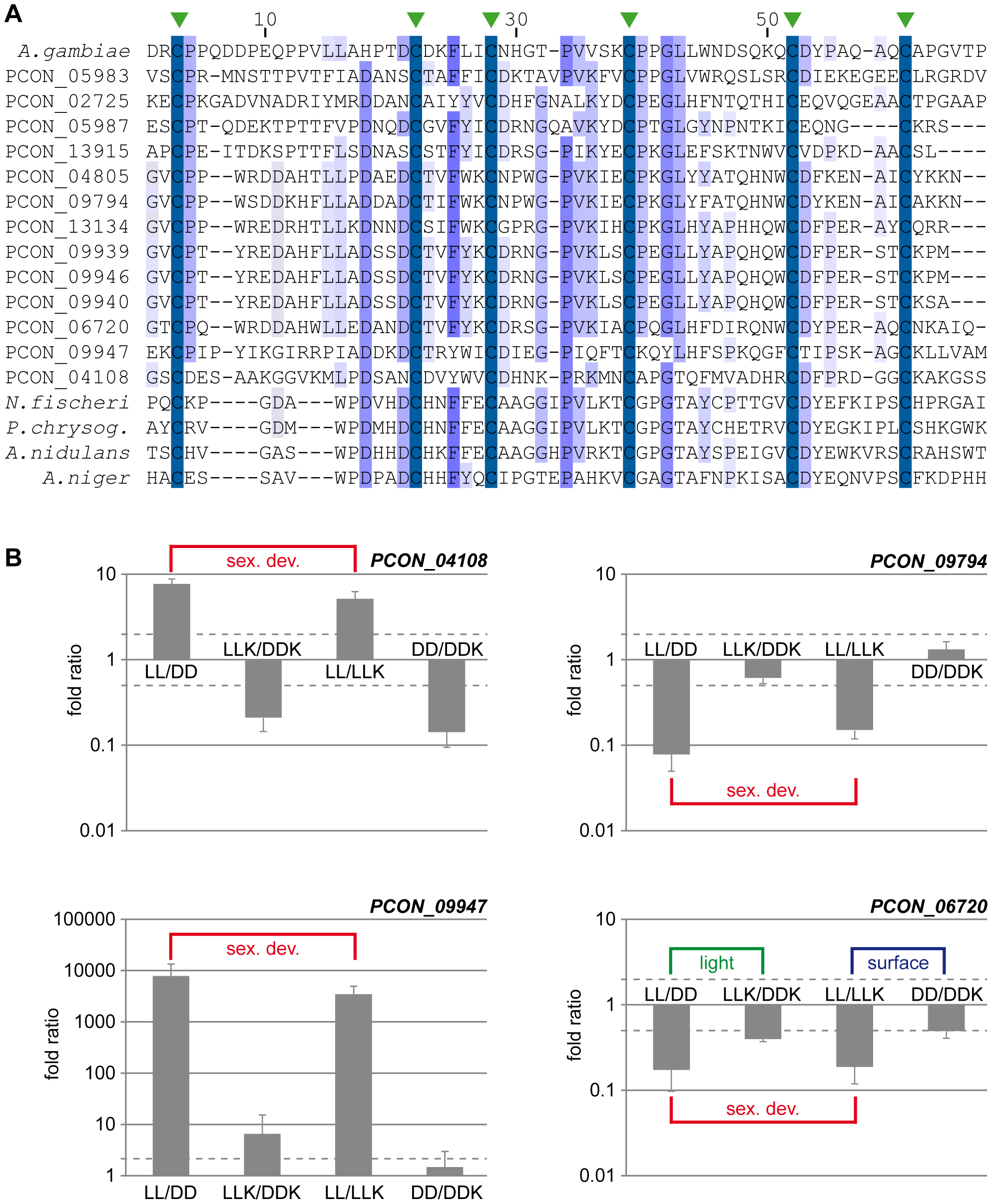 The CBM_14 domain protein family is expanded in <i>P. confluens</i>.