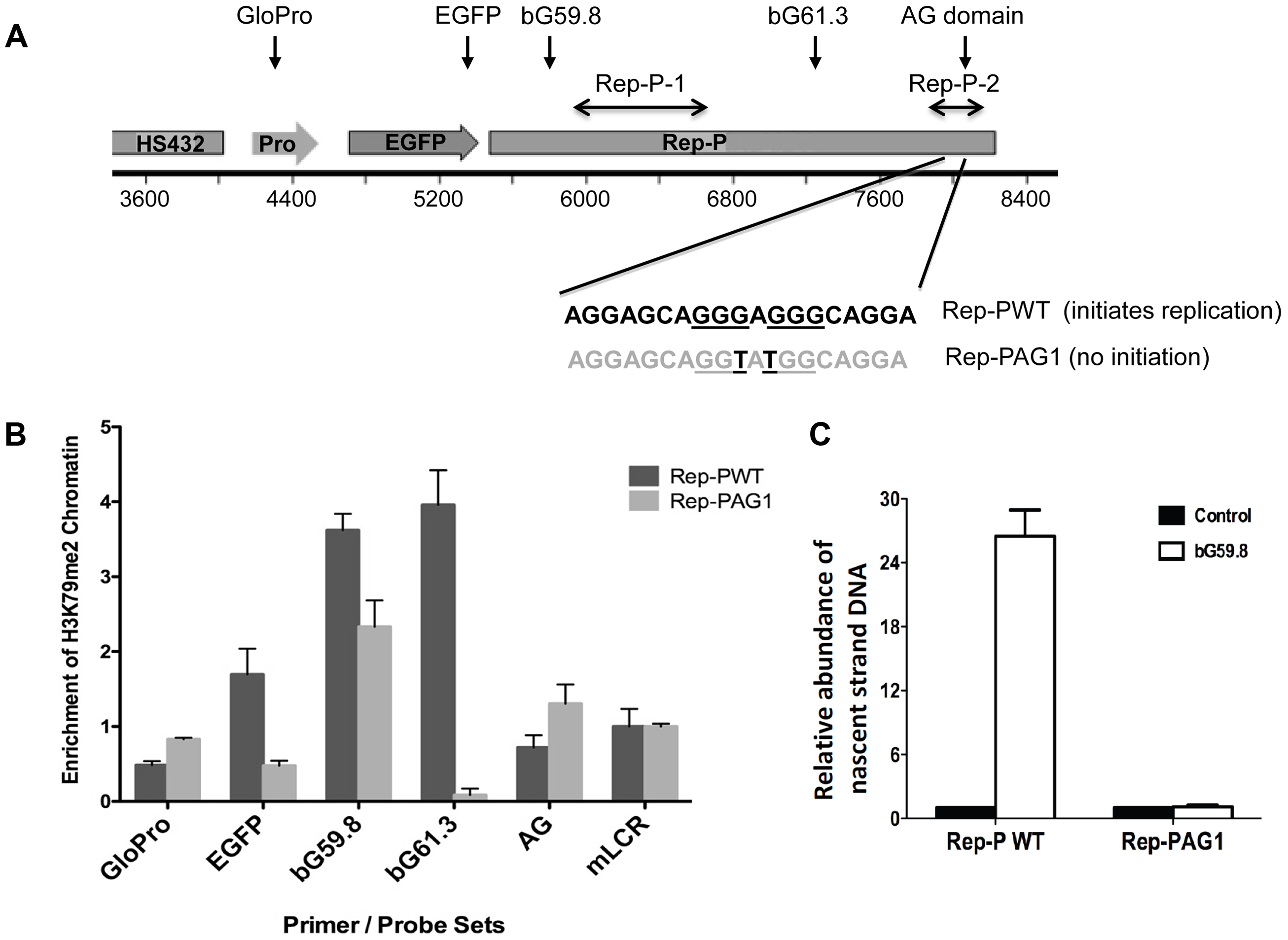 H3K79 dimethylation accompanies replicator activity.