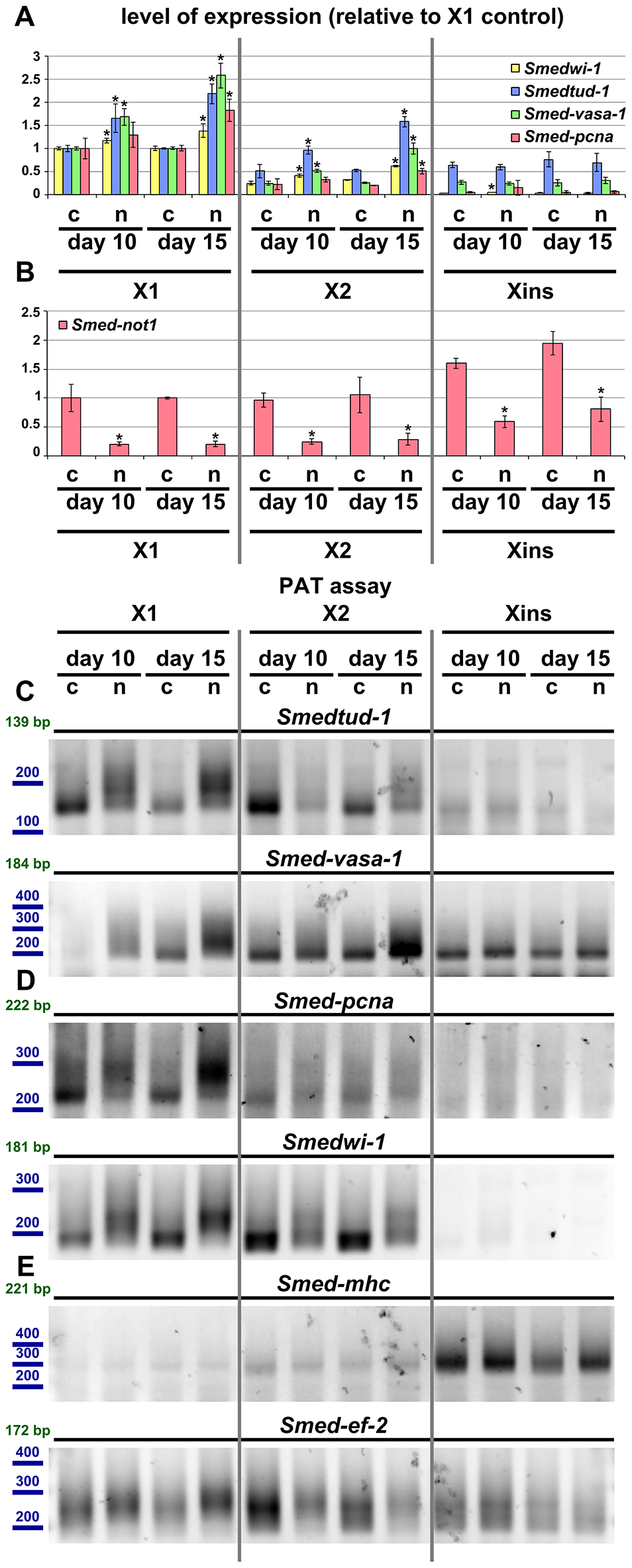 Increased level of transcripts and increased frequency of long poly(A) tails are restricted to neoblast-containing cell populations.