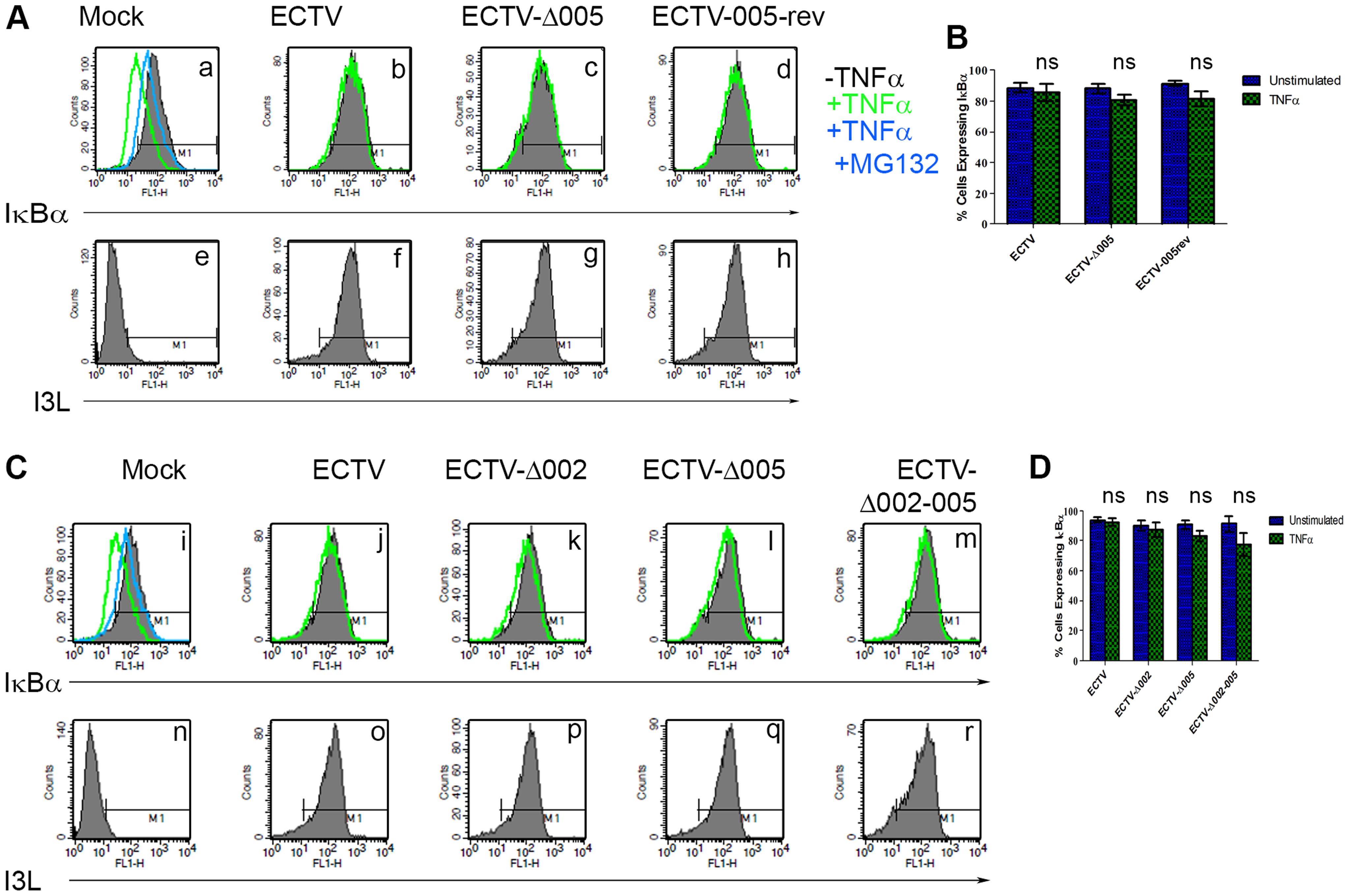 ECTV-Δ005, ECTV-Δ002 and ECTV-Δ002-005 inhibit TNFα induced IκBα degradation.
