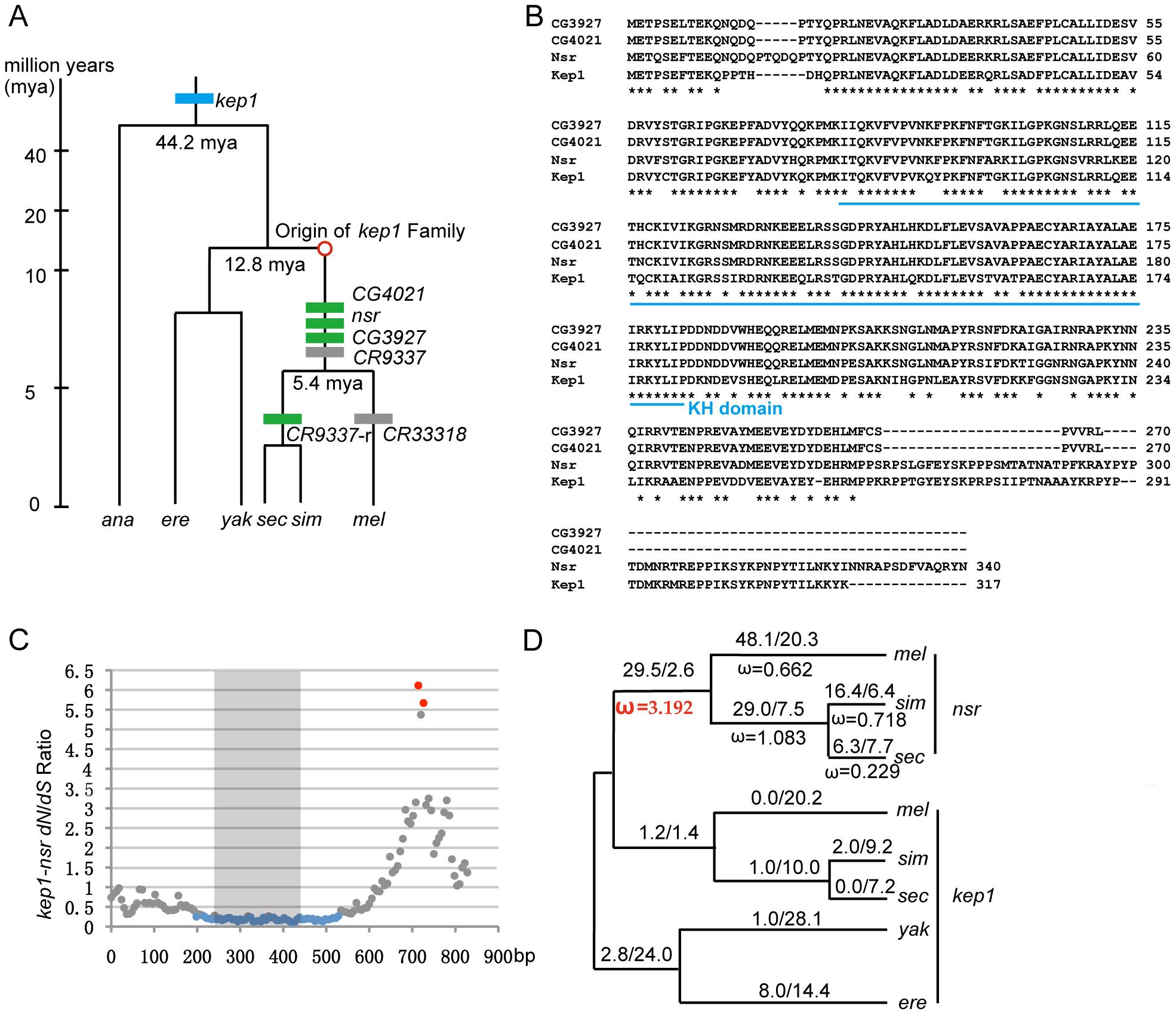 Evolutionary analysis of <i>kep1</i> family.