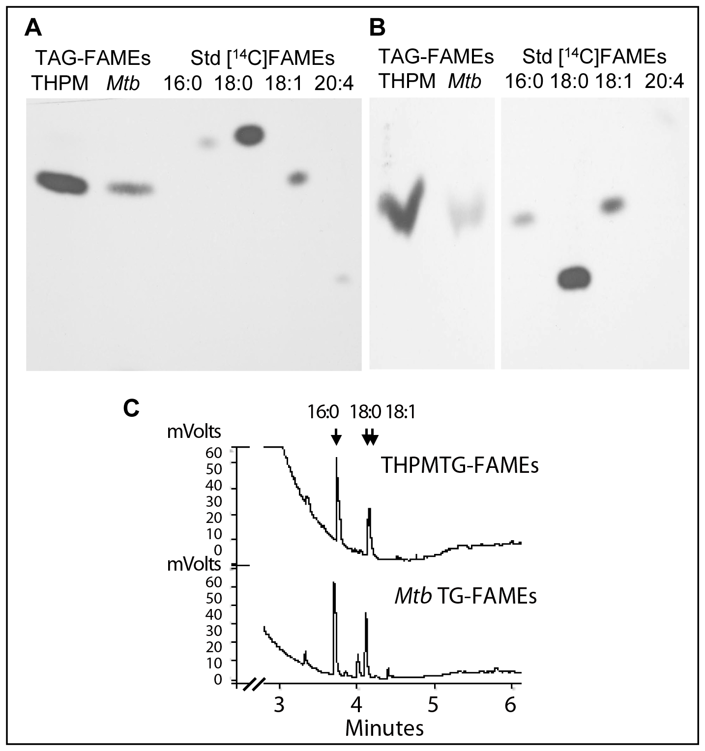 Fatty acid composition analysis confirms that <i>Mtb</i> incorporates host TAG-derived fatty acids directly into TAG.