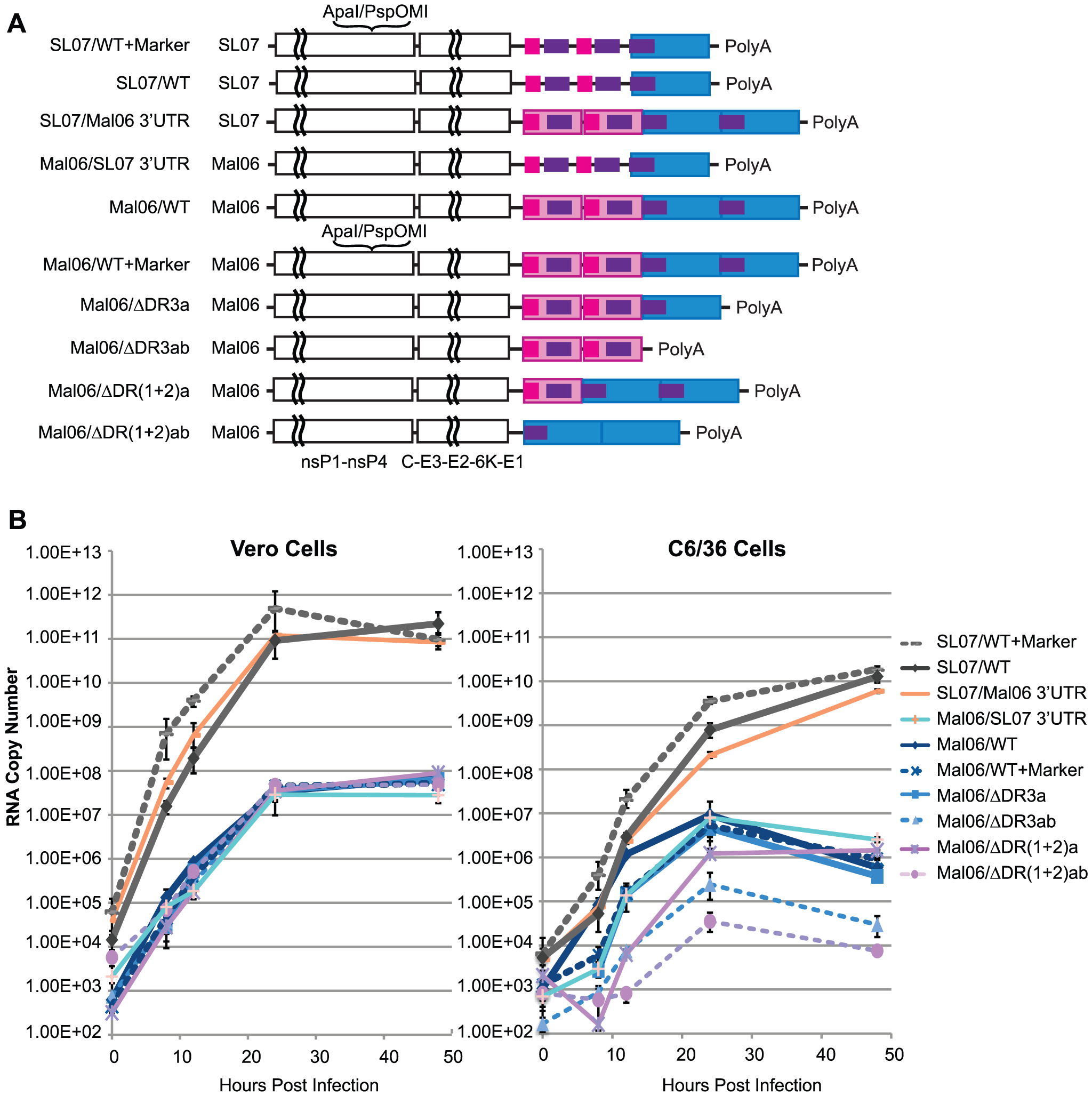 Replication kinetics of CHIKV variants in Vero and C6/36 cells.