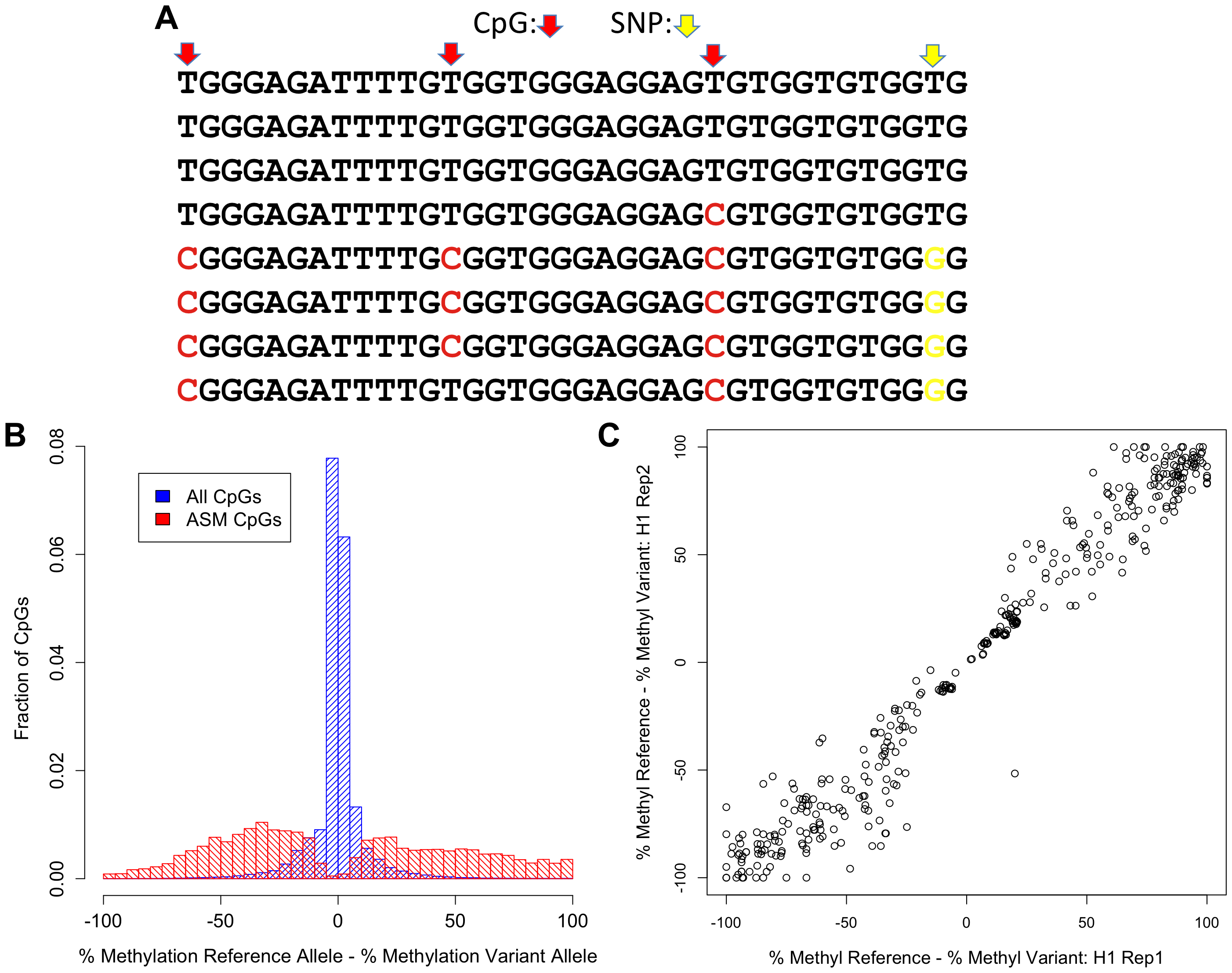 Discovery of ASM by reduced representation bisulfite sequencing.
