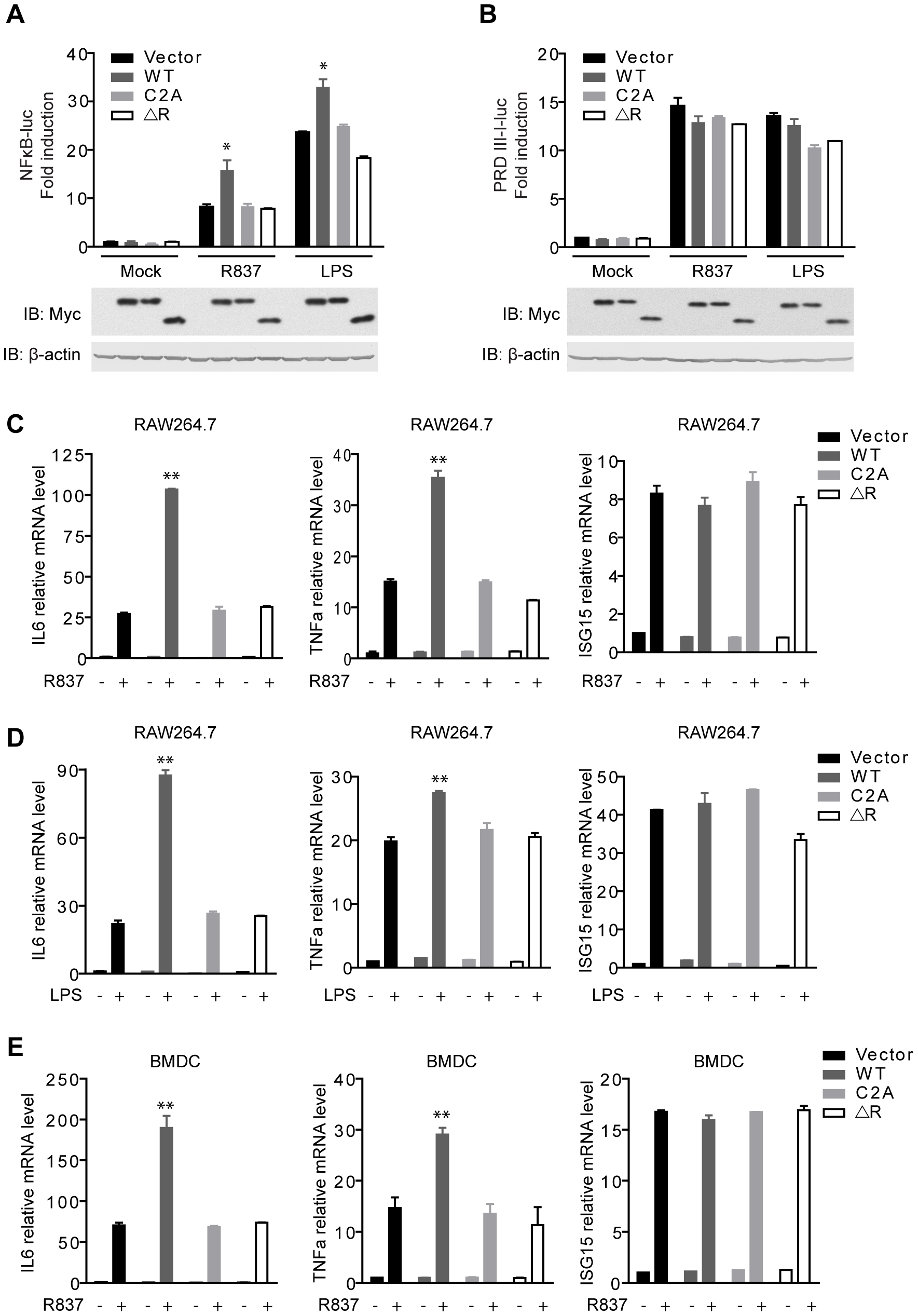 MARCH5 synergizes TLR7- induced NF-κB activation.