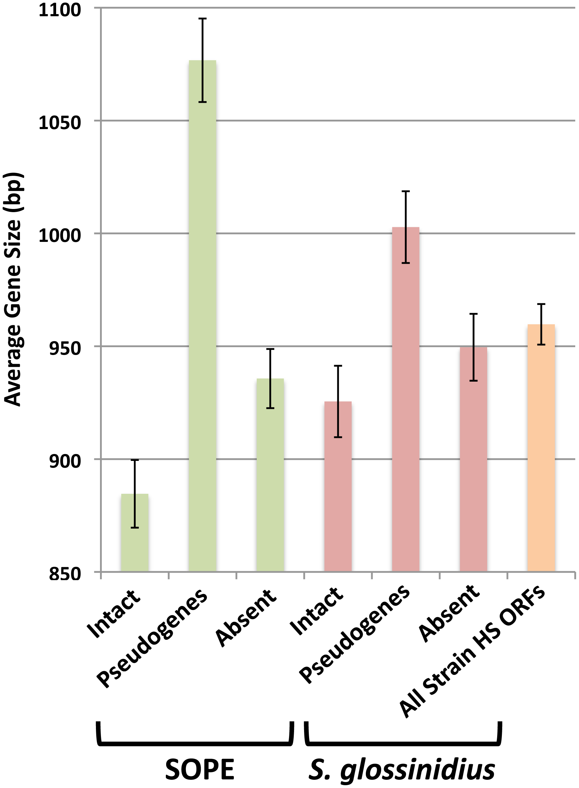 Average size of strain HS orthologs classified as intact, pseudogenized, and absent in SOPE (green) and <i>S. glossinidius</i> (red).