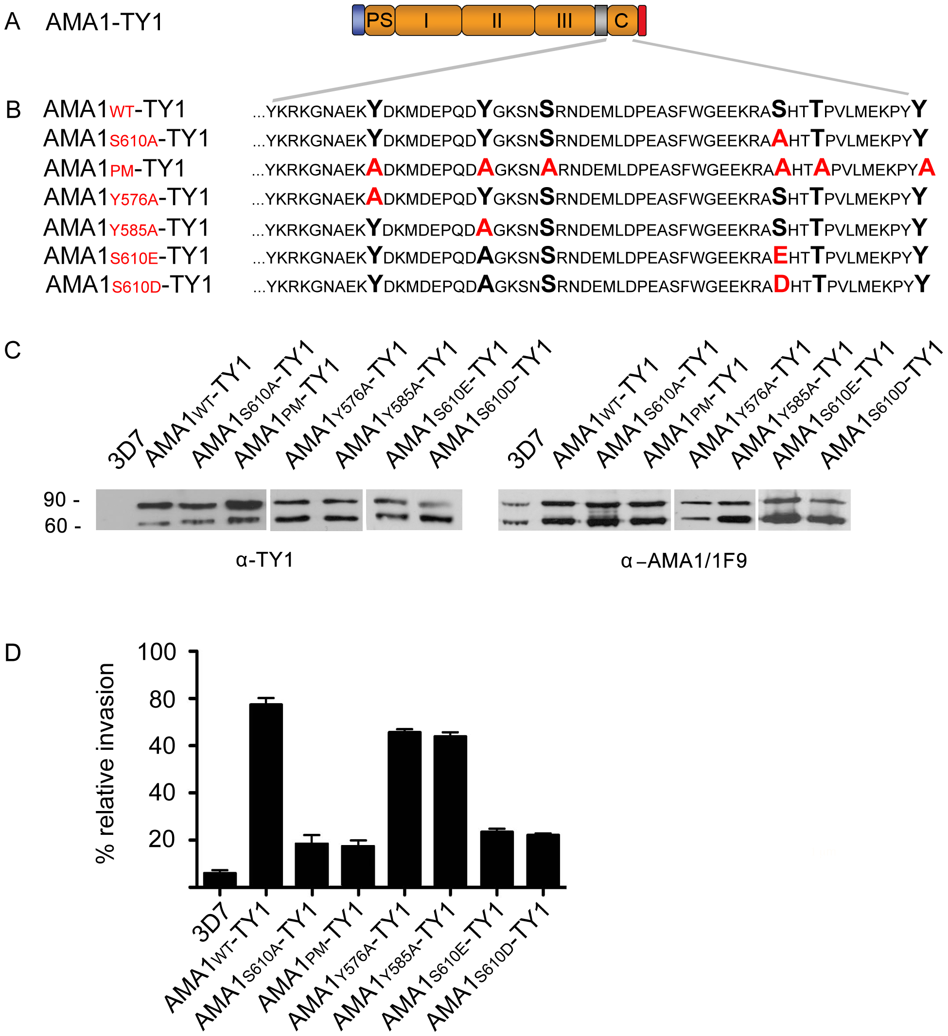 The <i>Pf</i>PKA phosphorylated residue S610 is required for efficient merozoite invasion.
