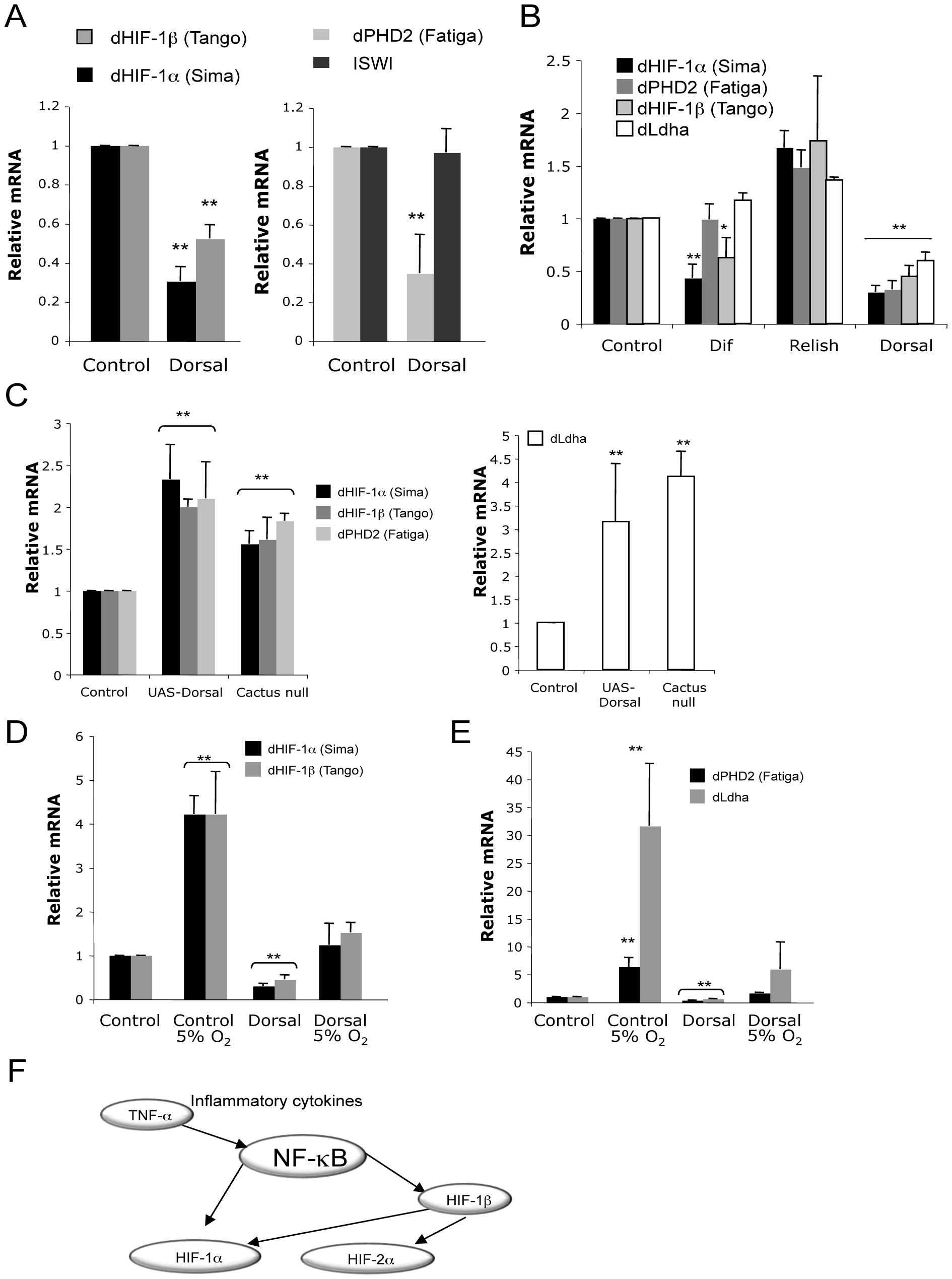 NF-κB–mediated control of the HIF system is conserved in <i>Drosophila</i>.
