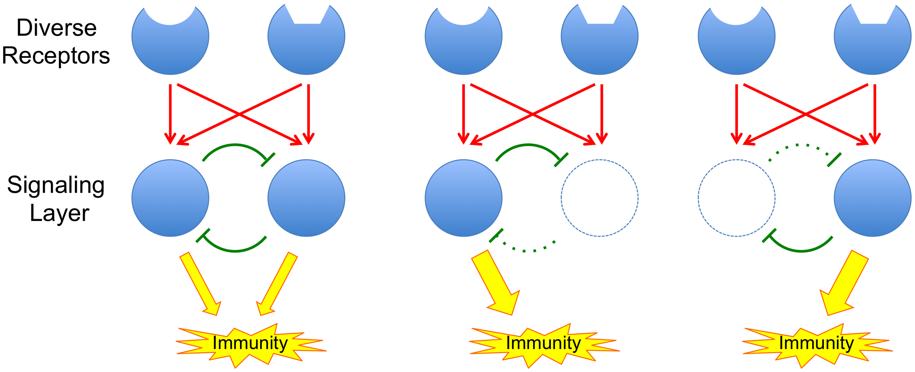 The principle of a buffered signaling network.