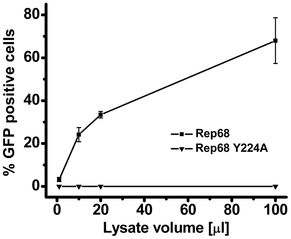 Effect of Y224 mutation on AAV-2 virus liability.