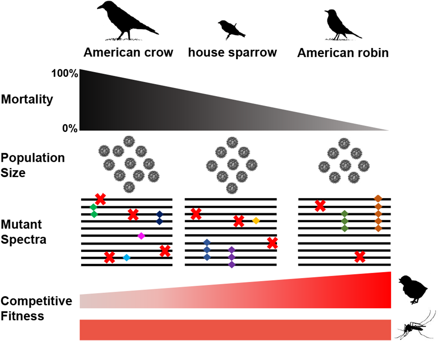 Species-specific composition of WNV populations and competitive fitness.