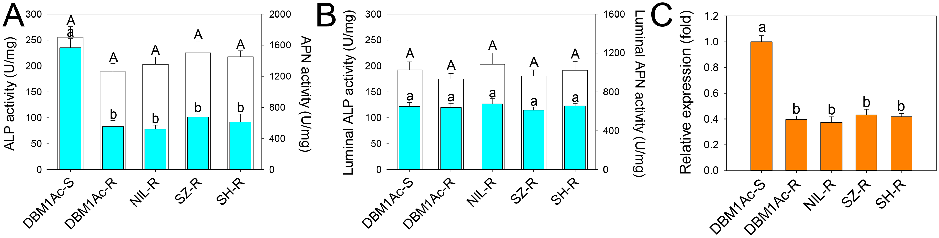 Reduced ALP levels in larval midgut samples from resistant compared to susceptible <i>P</i>. <i>xylostella</i> strains.