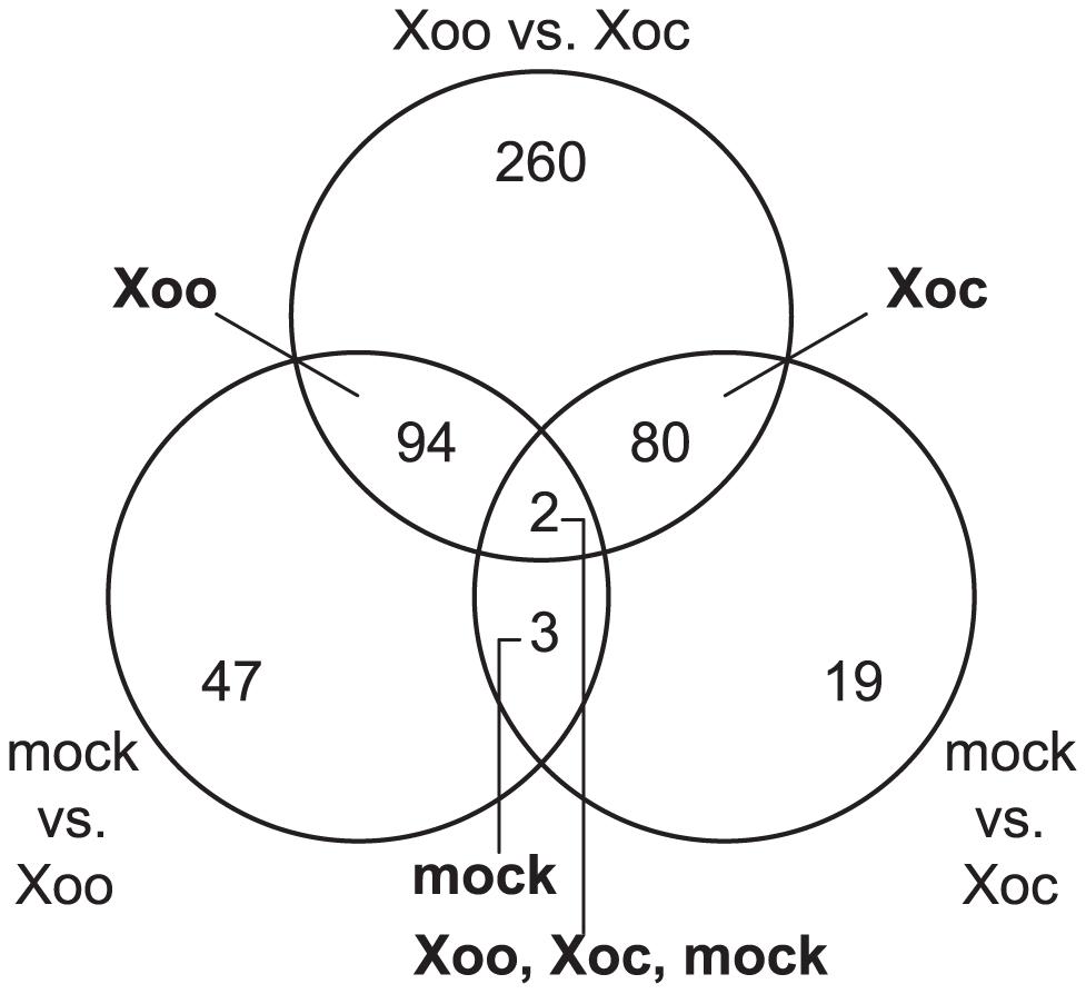 Rice transcriptional responses to <i>Xanthomonas oryzae</i> pv. oryzicola BLS256 (Xoc) or <i>X. oryzae</i> pv. oryzae PXO99<sup>A</sup> (Xoo).