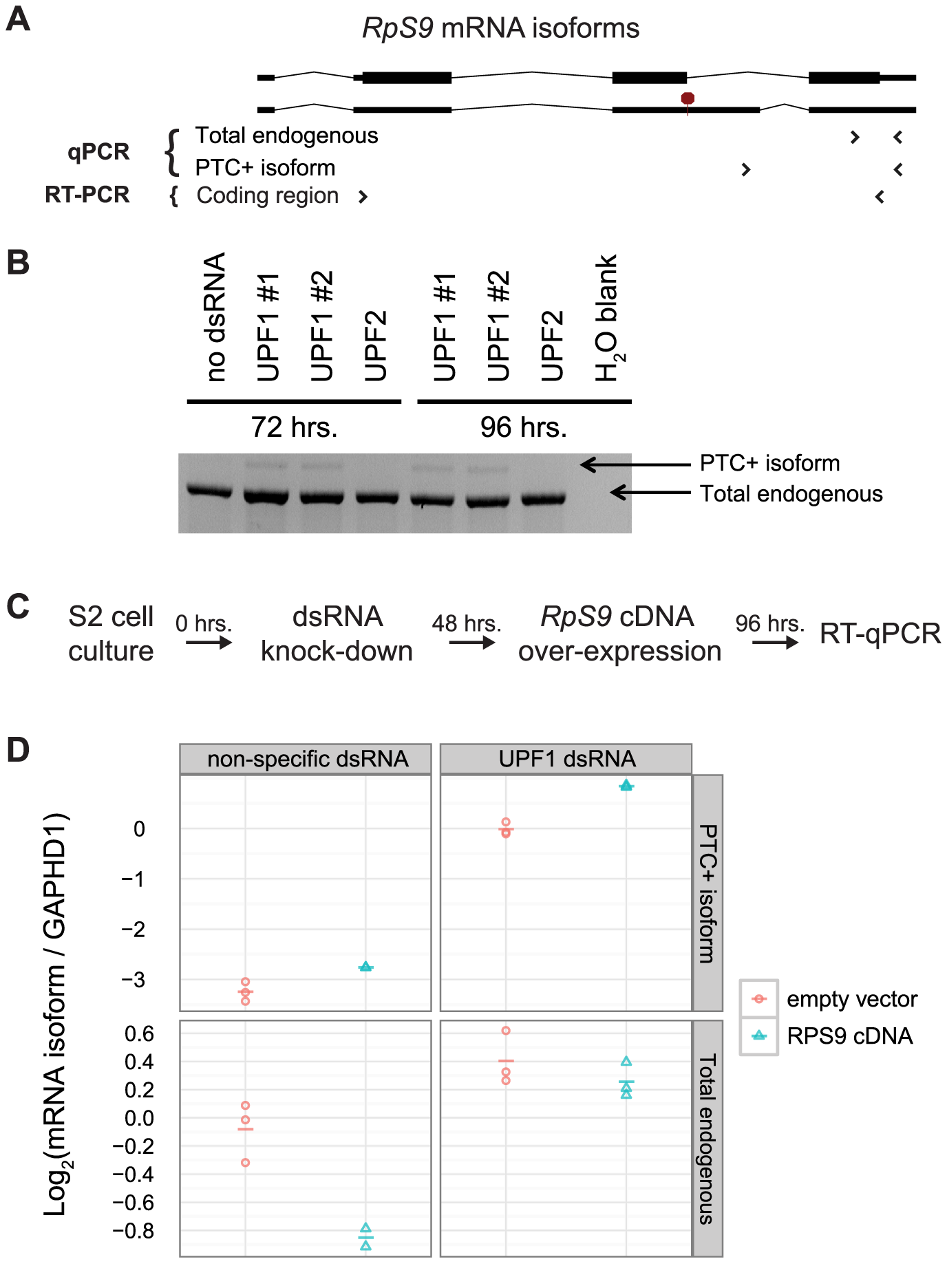 <i>D. melanogaster RpS9</i> is autoregulated by alternative splicing coupled to NMD.