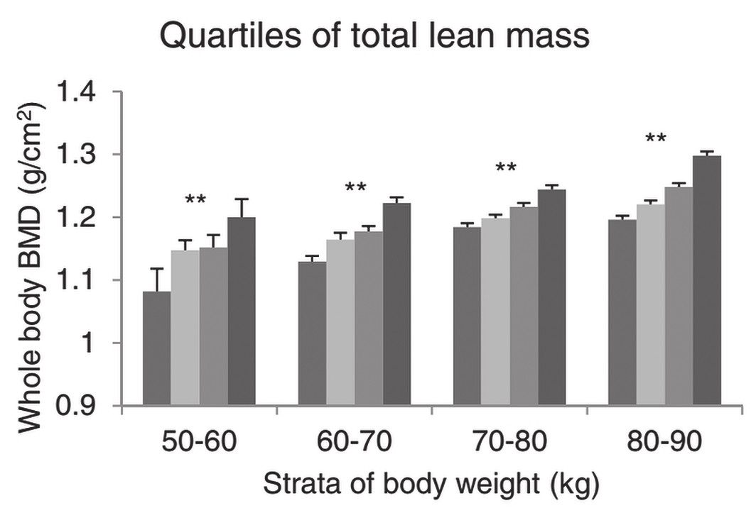Fig. 1 Values of whole body bone mineral density (BMD) in relation to total lean mass. Least squares means (standard error) of the BMD adjusted for age and height, across quartiles of body compositions in 10-kg strata of body weight. The bars from left to right are quartiles 1, 2, 3 and 4 of body composition. Significance of trends: **p<0.001. From [3] with permission.