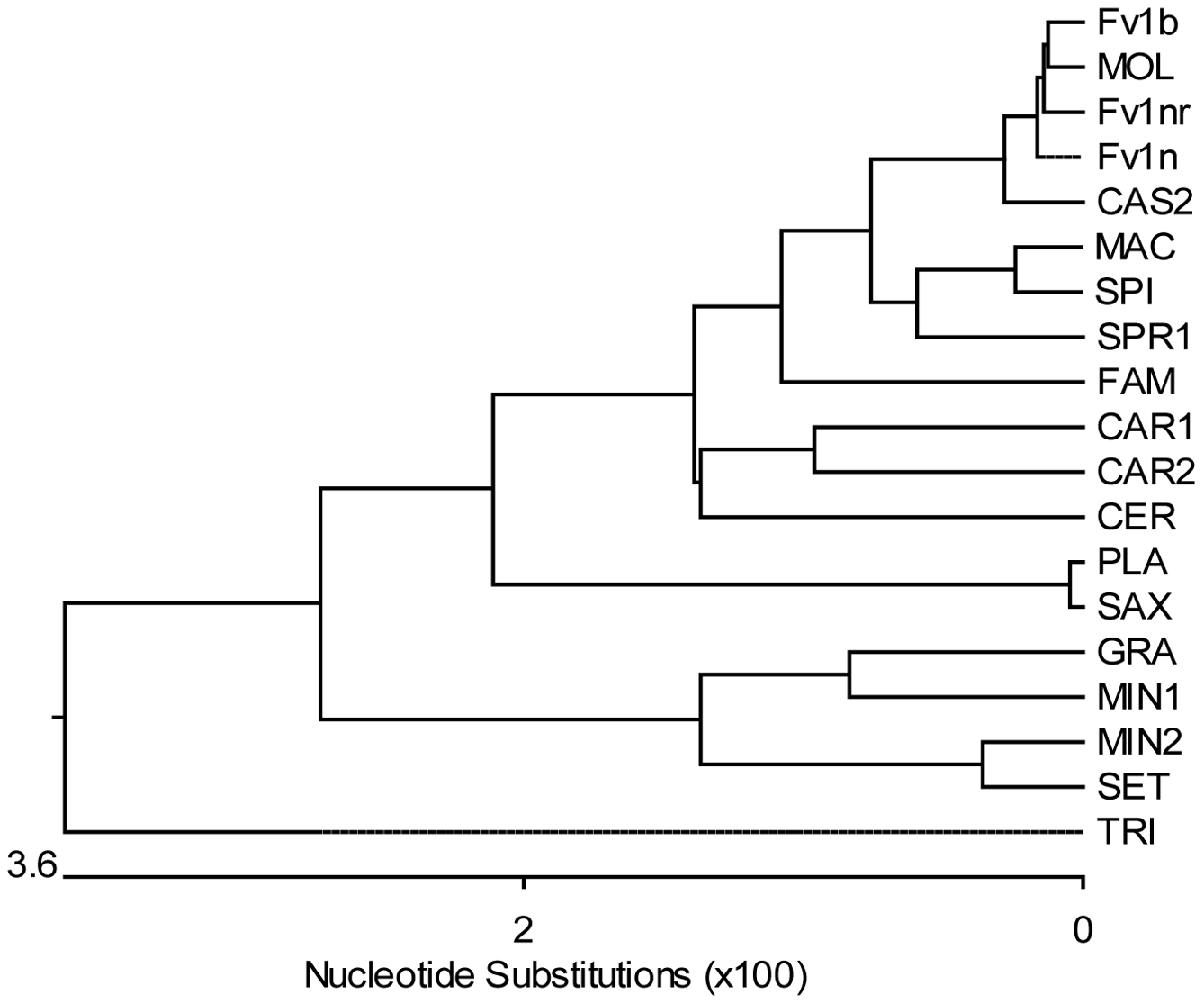 Phylogenetic tree of <i>Fv1</i> sequences.