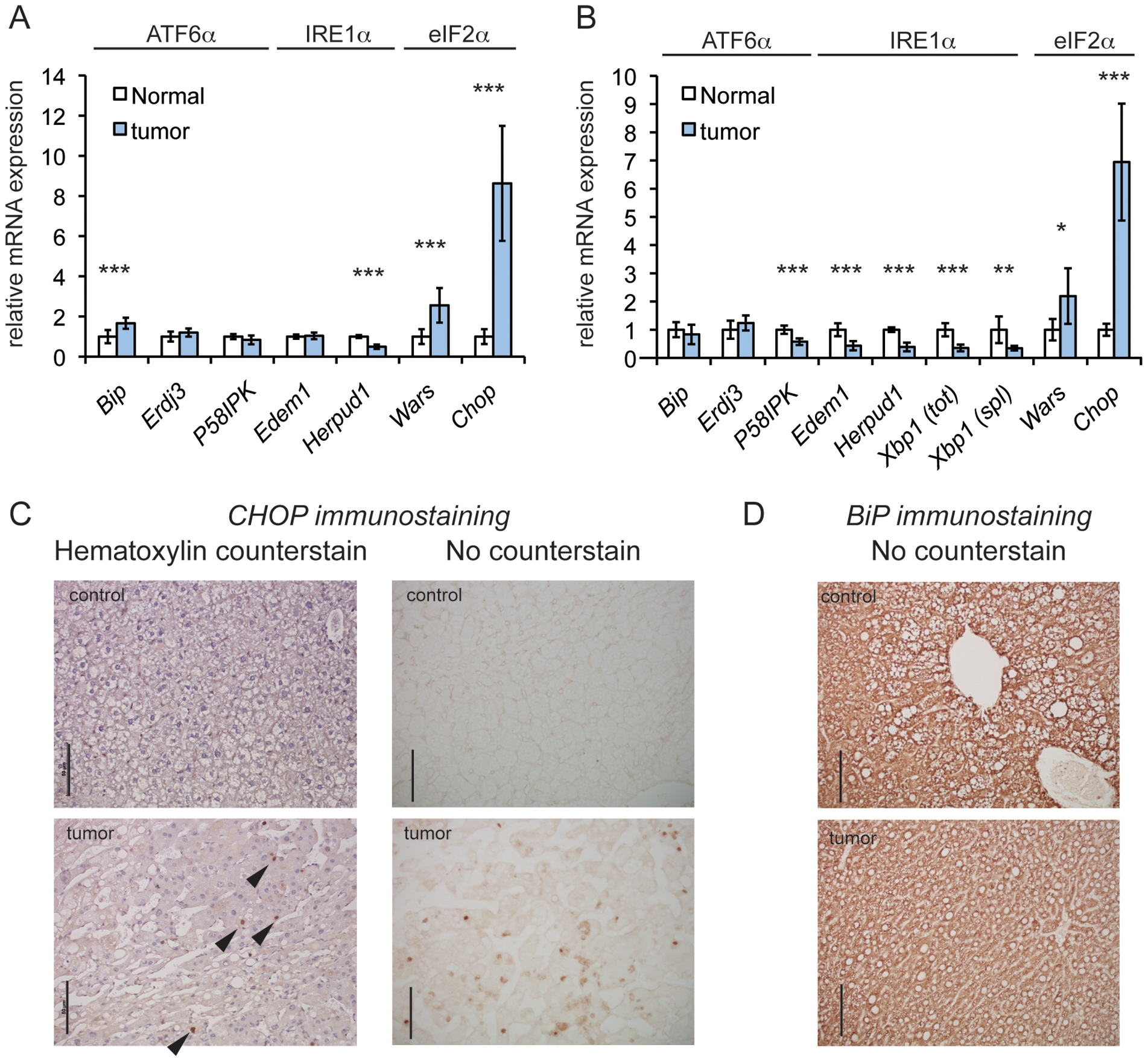 CHOP is upregulated in a genetic mouse model of HCC.