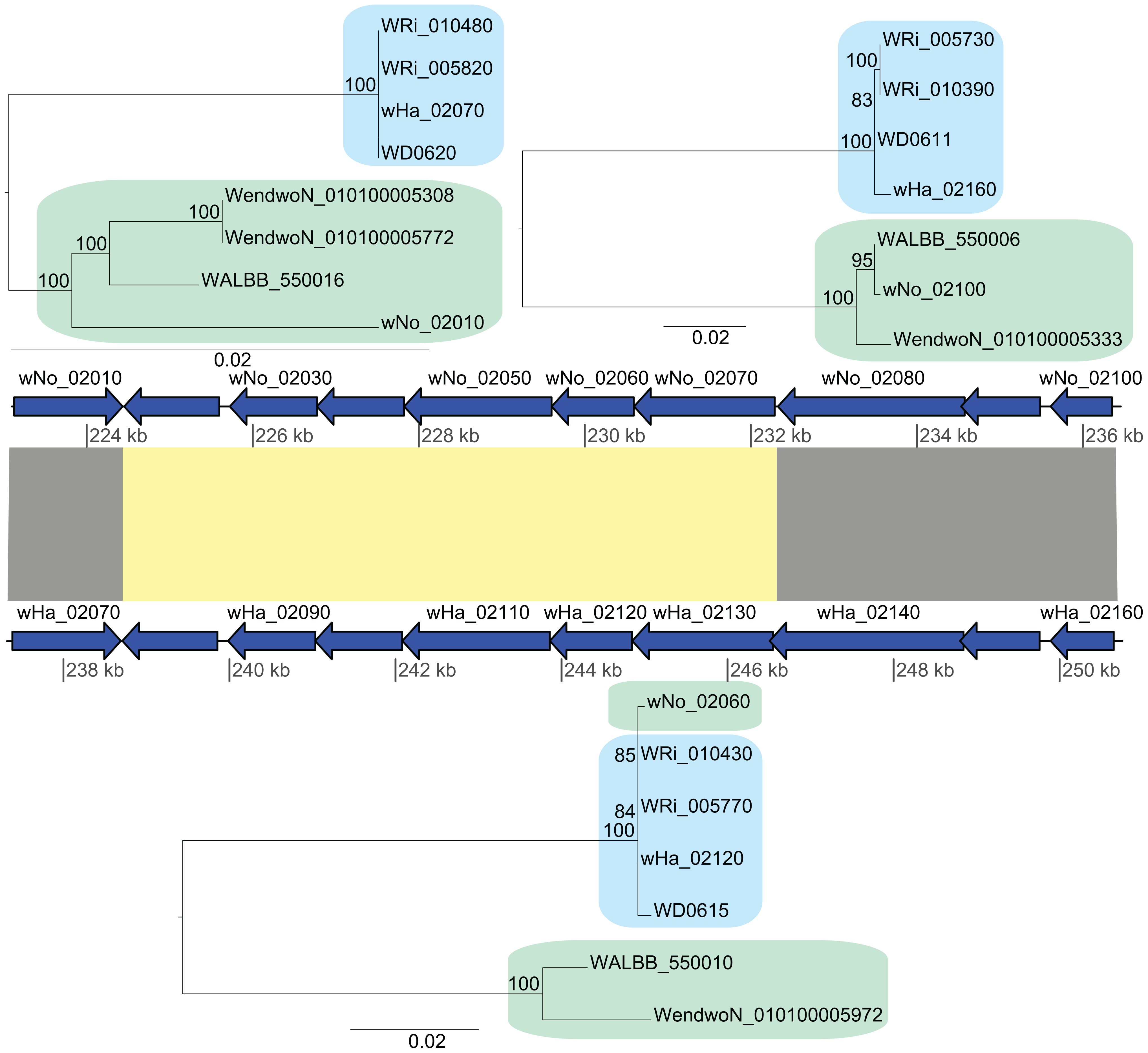 Recombination of chromosomal genes between the supergroup A and B strains.