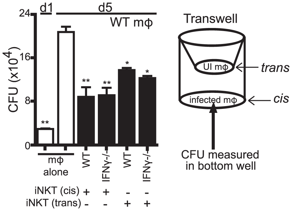The antimicrobial effector function of iNKT cells is a soluble factor.