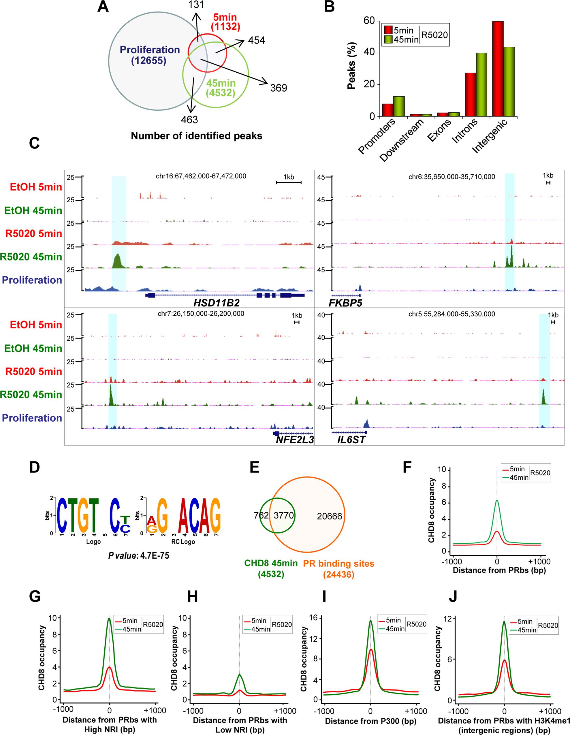 Hormone-dependent CHD8 recruitment to PR binding sites.