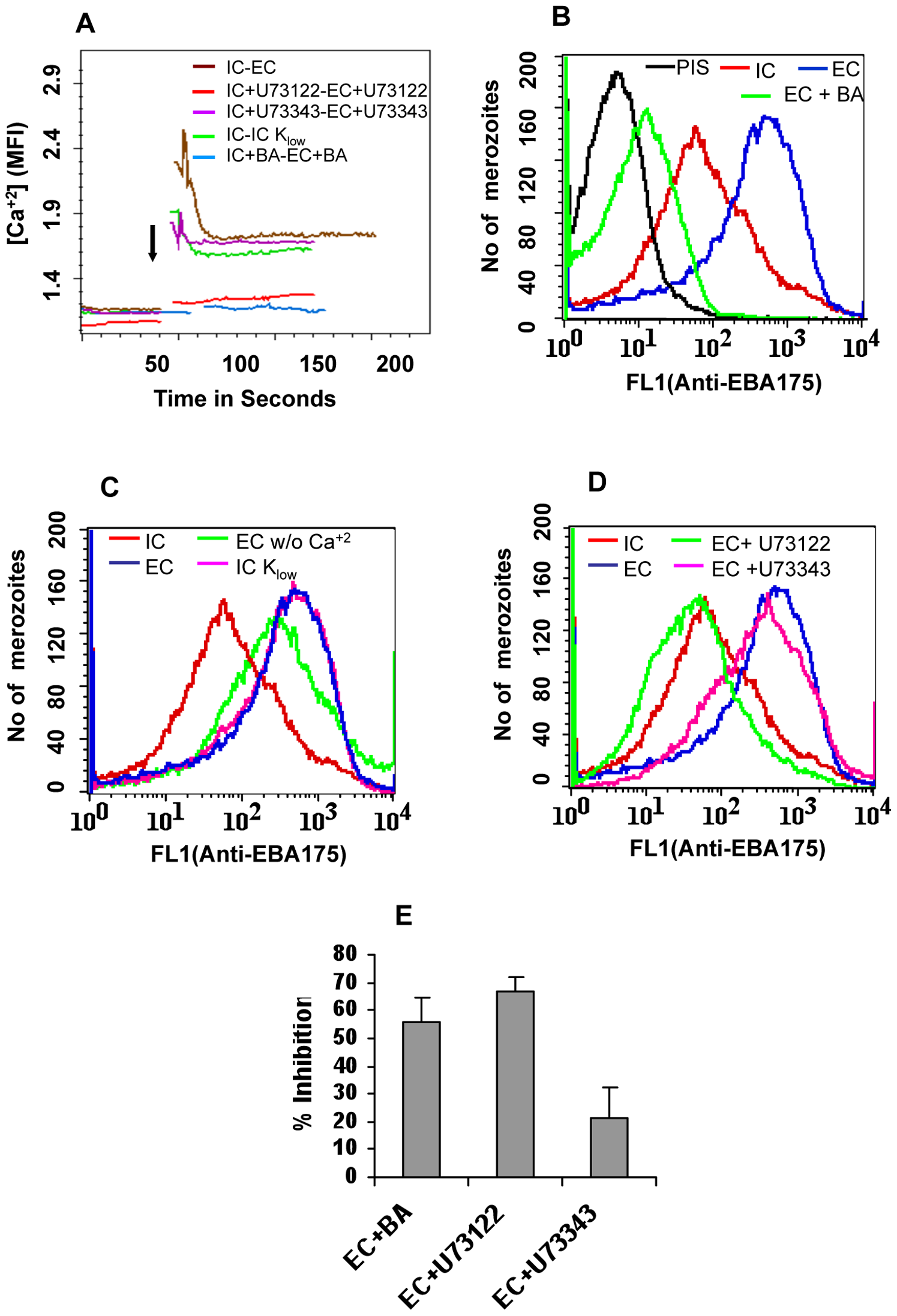 Cytosolic calcium levels and expression of EBA175 on merozoite surface in response to changes in ionic conditions.