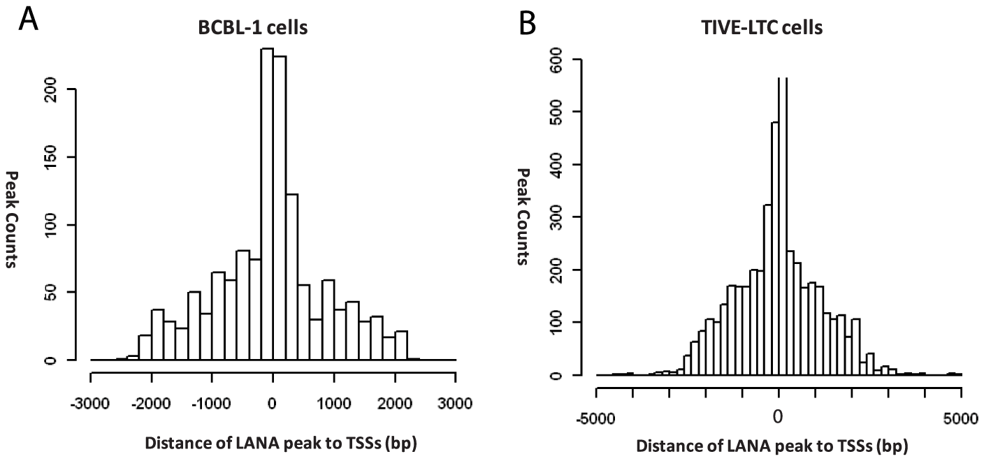 Positions of LANA peaks to the transcription start sites of known genes in BCBL-1 and TIVE-LTC cells.