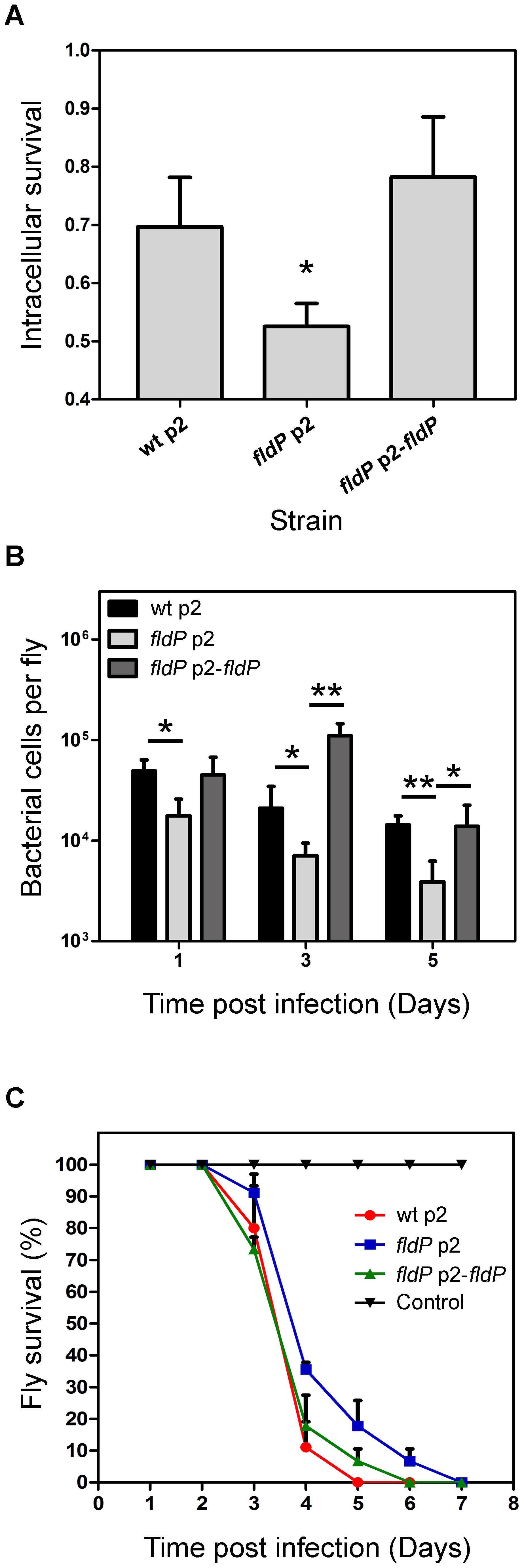 FldP enhances <i>P. aeruginosa</i> survival within mammalian macrophages and during <i>in vivo</i> infection of <i>Drosophila melanogaster</i>.