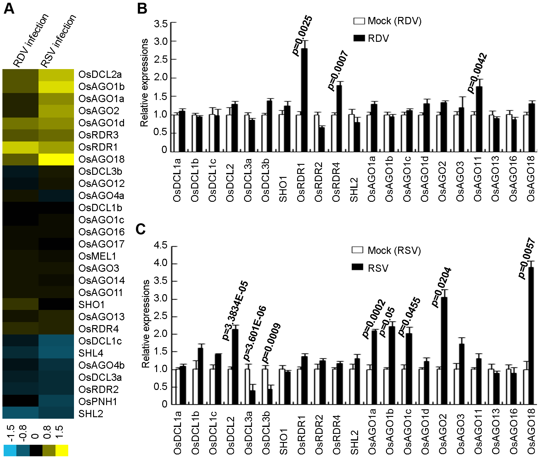 Expression analysis of OsDCLs, OsAGOs and OsRDRs of rice plants infected with RDV and RSV as compared to mock controls.