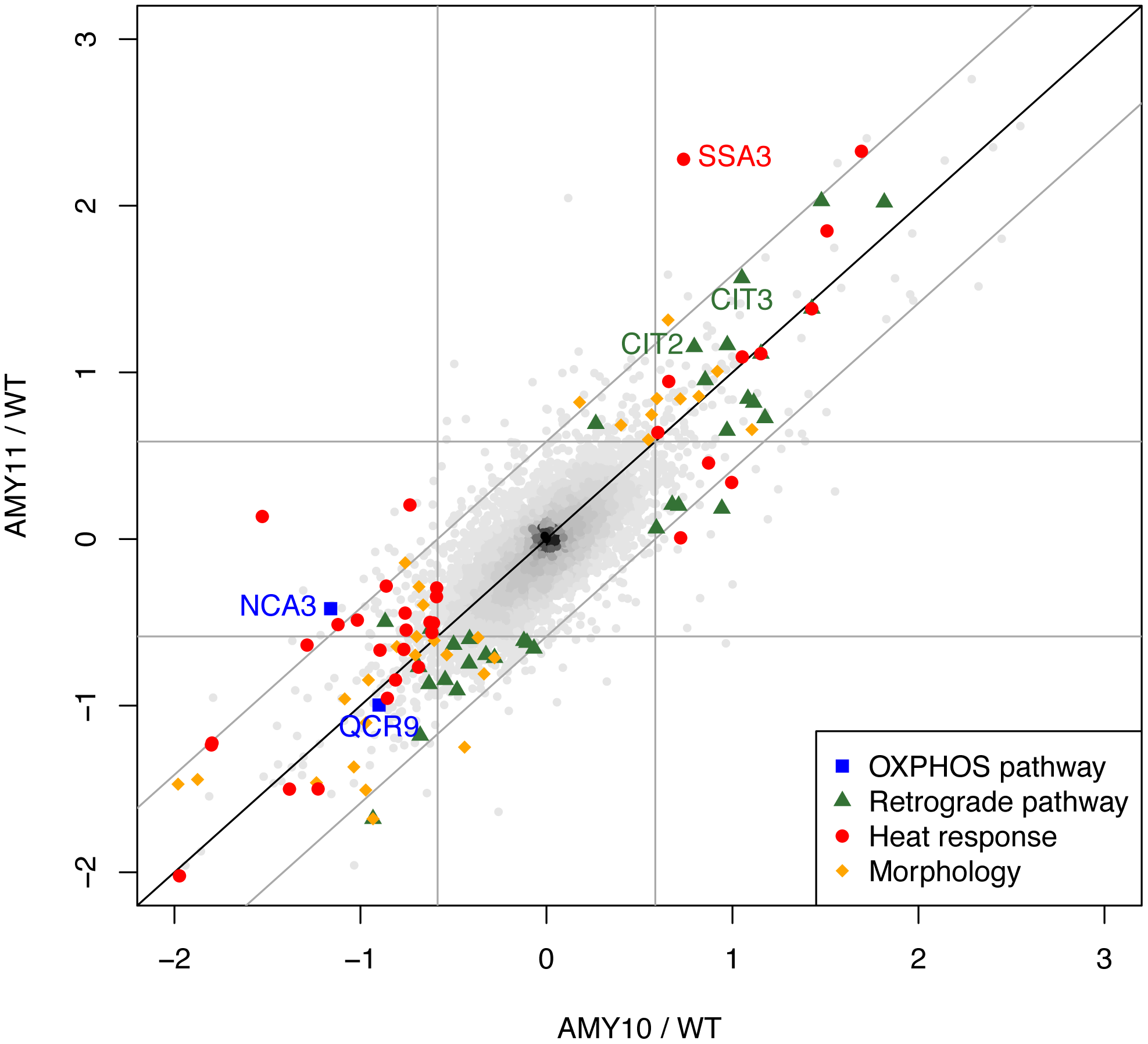 Transcriptome profiles of yeast strains expressing <i>P. anserina Atp9</i> genes indicate functional OXPHOS and regulatory responses to the nuclear relocation of <i>ATP9</i>.
