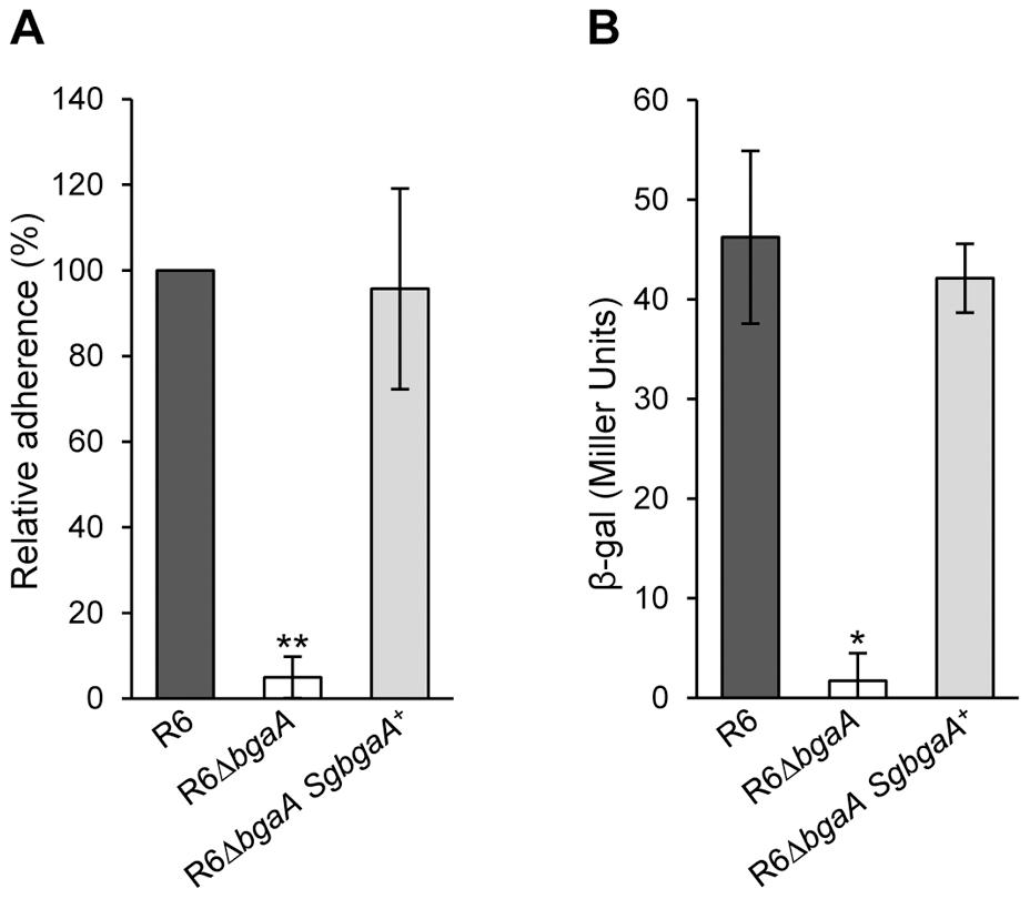 <i>S. gordonii bgaA</i> can restore the β-galactosidase activity and adherence of a <i>S. pneumoniae bgaA</i> mutant.