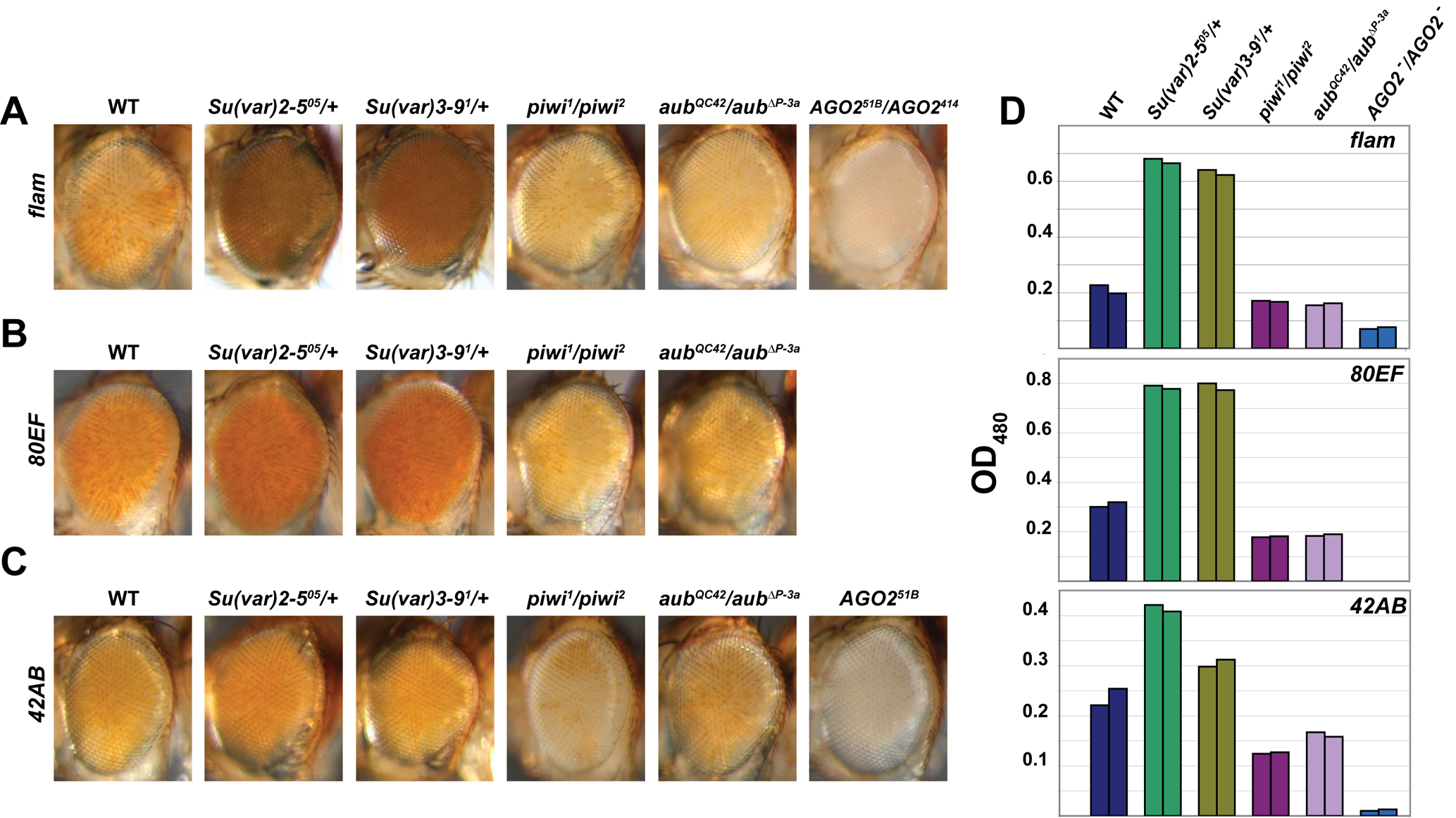 piRNA and endo-siRNA pathway mutants display increased silencing of transcriptional reporters at or near piRNA clusters.