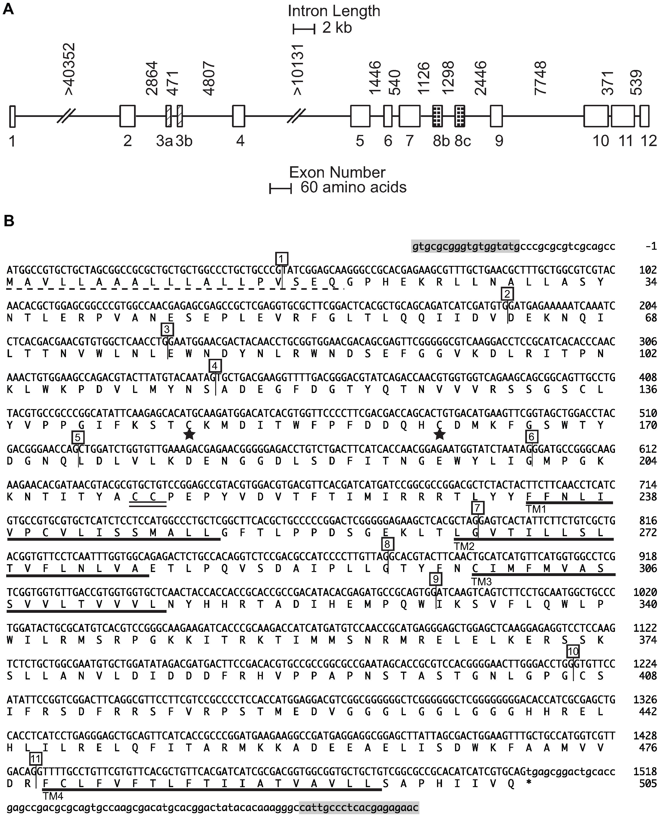 <i>nAChR Pxα6 g</i>ene and coding sequence.
