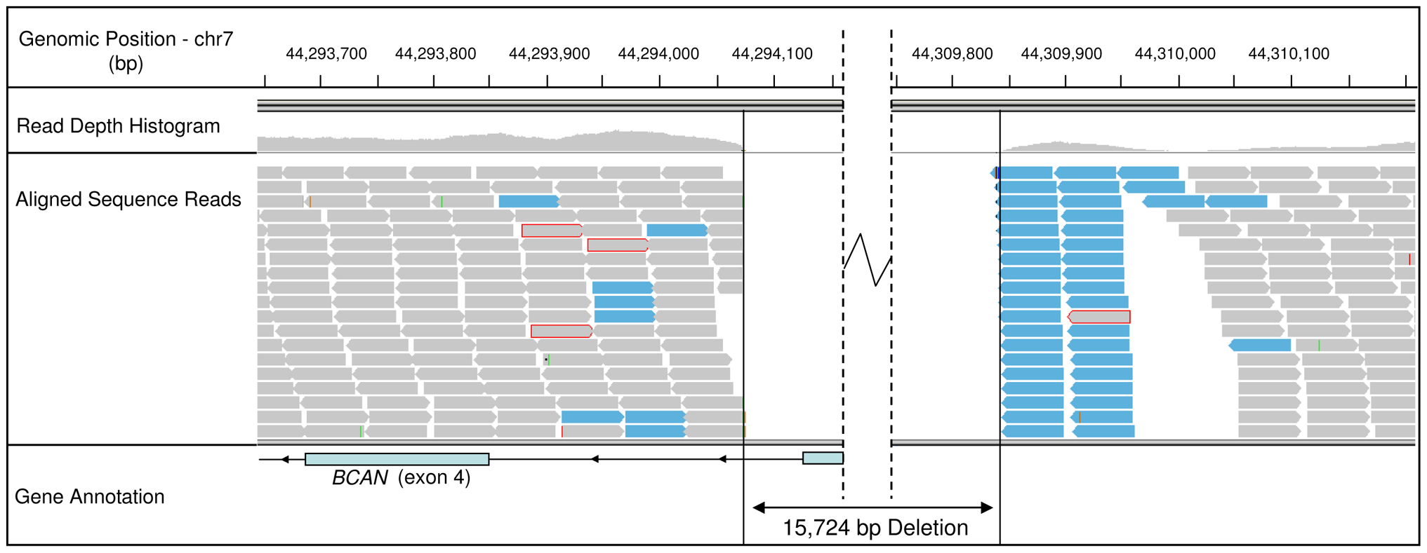Sequence read alignments for an EF case, spanning the 5′ region of the <i>BCAN</i> gene.