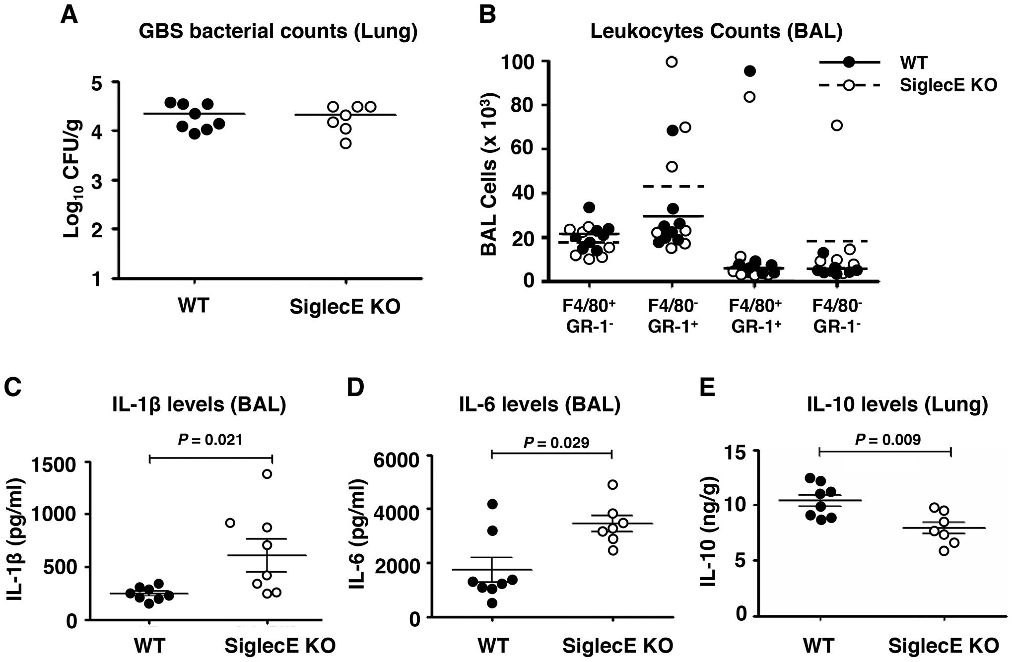 Skewed cytokine responses in Siglec-E KO mice challenged in a GBS intranasal pneumonia model.
