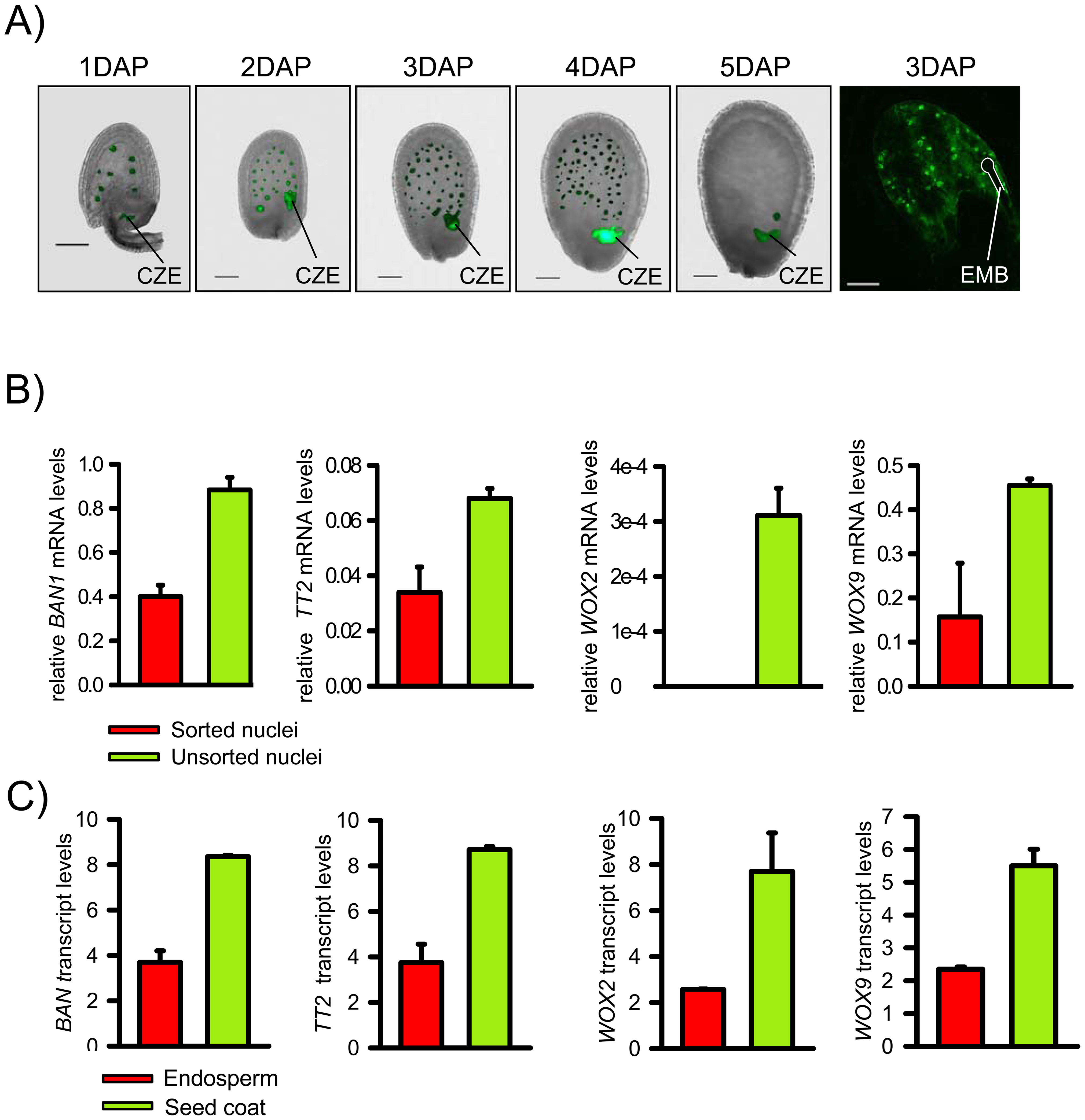 Isolation of EGFP Positive Endosperm Nuclei and Validation of the Technique.