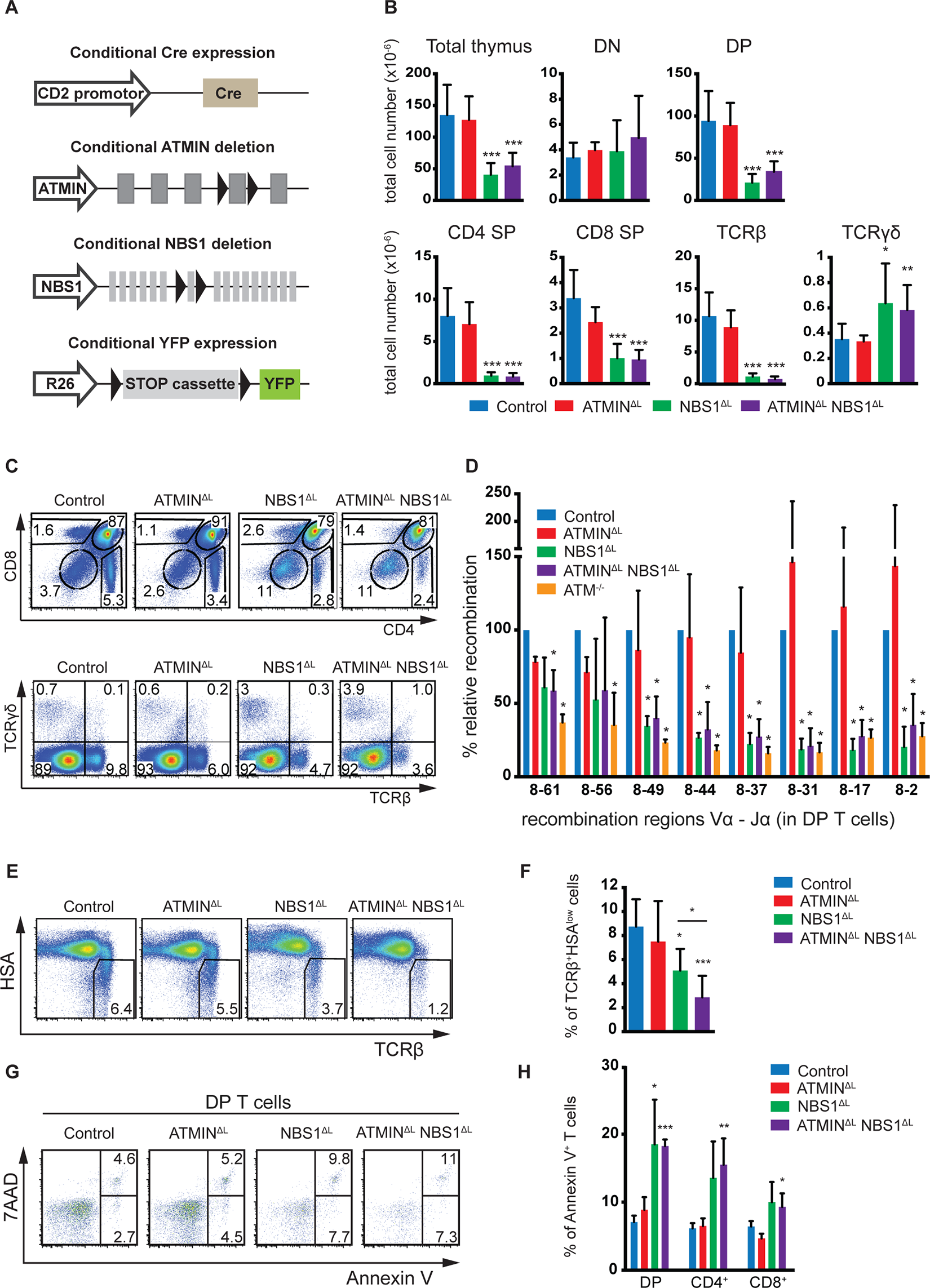 NBS1 is required for T cell development and TCRα recombination, which is largely unaffected by concomitant loss of ATMIN.