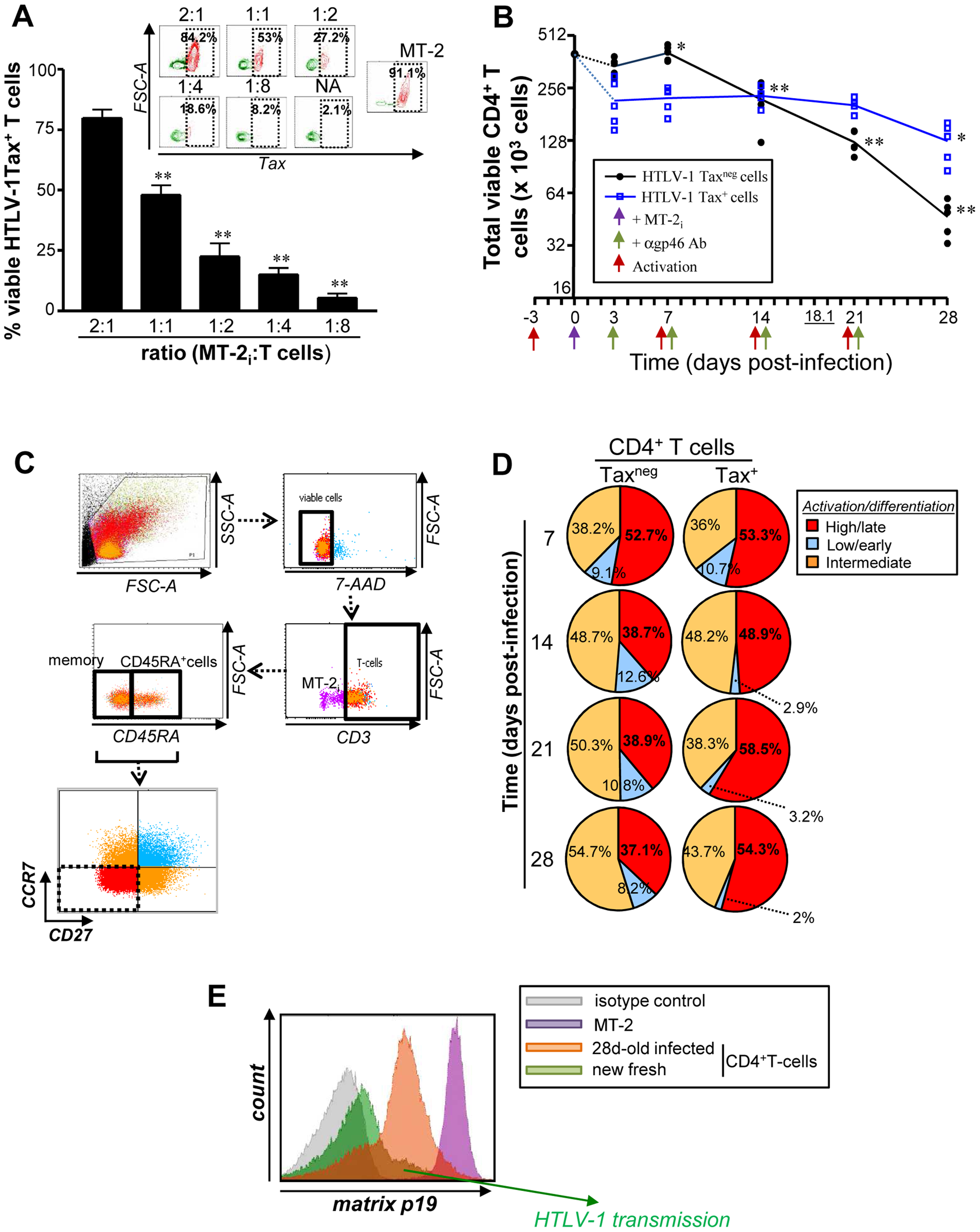 Productive HTLV-1 infection is associated persistence of infectious CD4<sup>+</sup>CD27<sup>neg</sup>CCR7<sup>neg</sup> T cells.