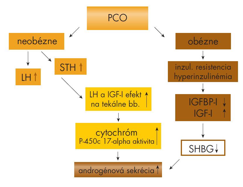 Obrázok. Mechanizmus hyperandrogenémie pri syndróme PCO.
