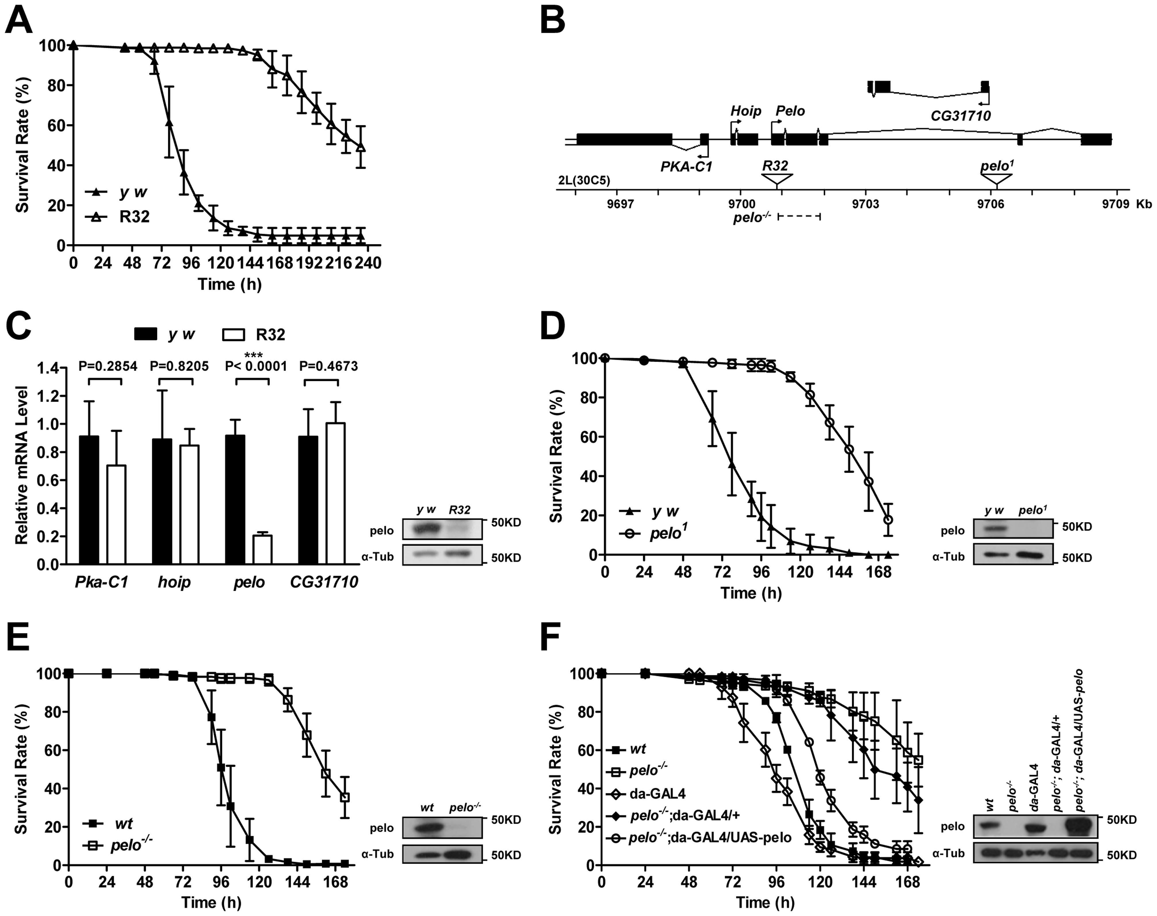 <i>pelo</i> deficiency mediates DCV resistance in adult flies.
