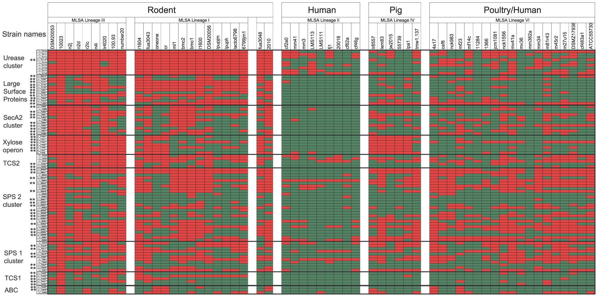 Distribution of genes that belong to putative genomic islands in 57 <i>L. reuteri</i> strains.